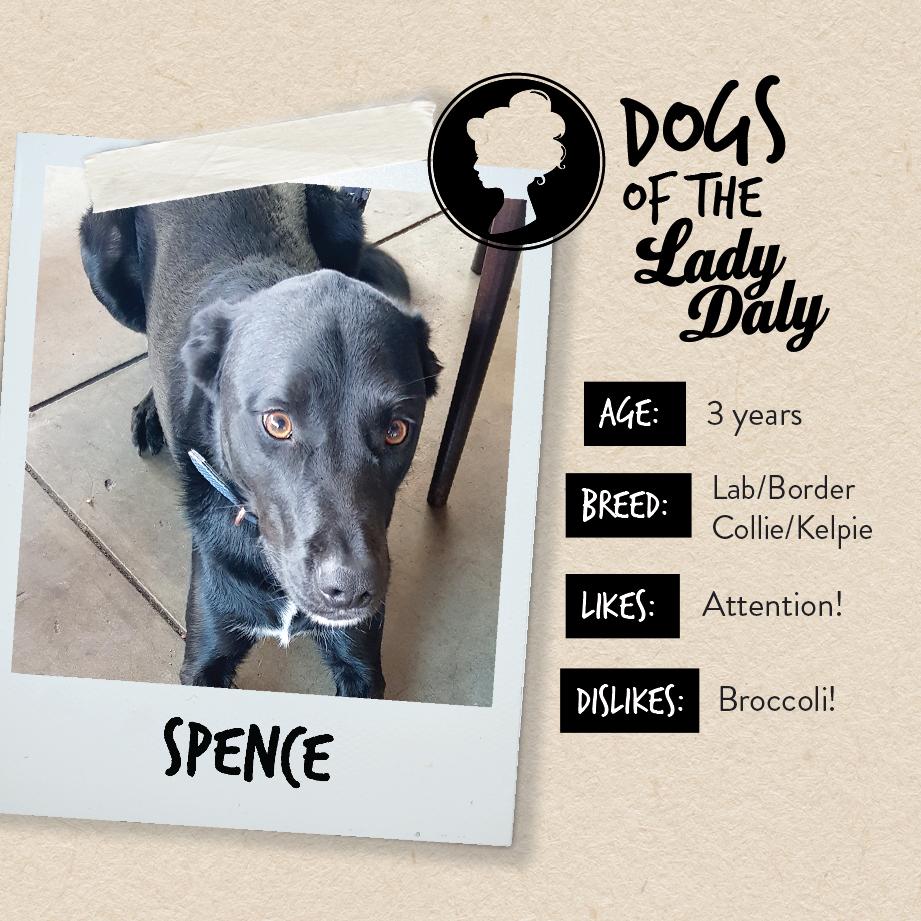 LD_Dogs_Spence-01.jpg