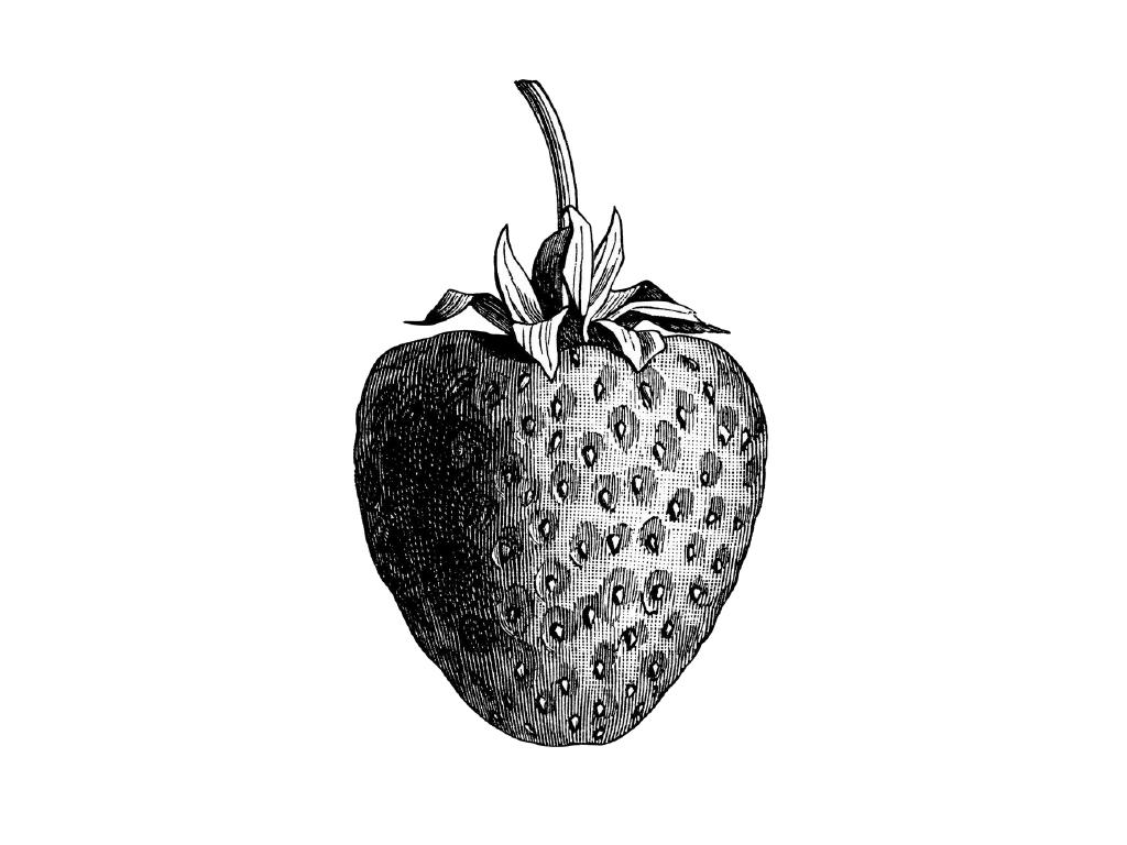 kisspng-wild-strawberry-strawberry-thief-shortcake-illustr-hand-painted-strawberry-5aa22dec19c3b8.1998696915205780281055.png