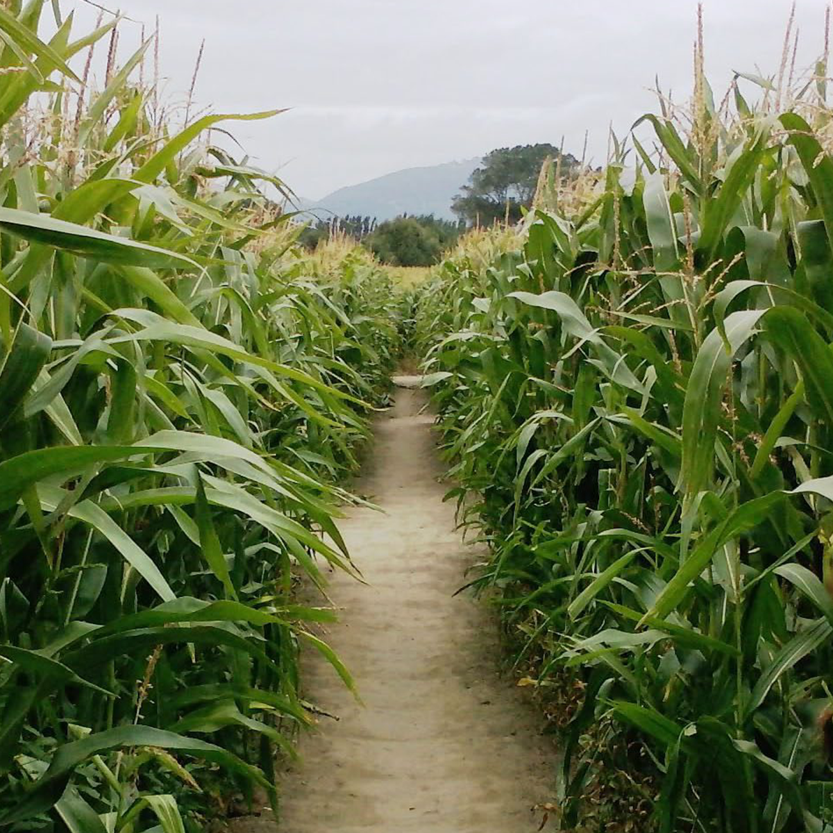 Get Lost In The Maze -
