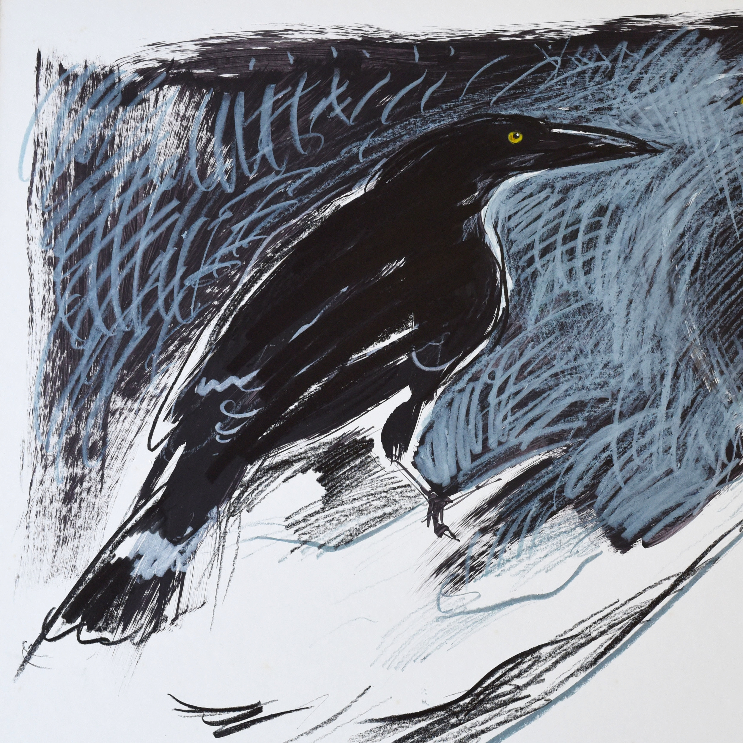 Crayon and pencil drawing of a black crow