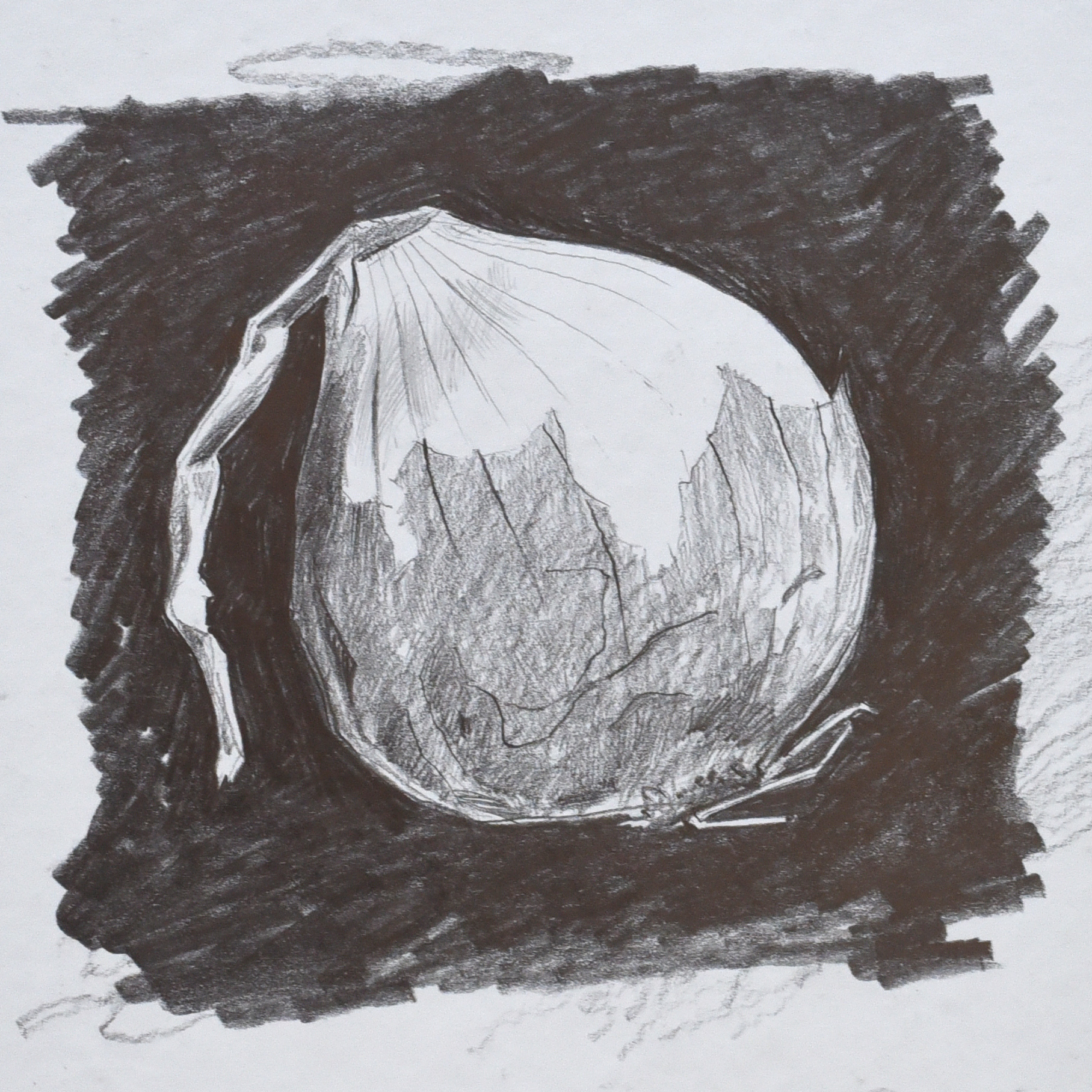Charcoal drawing of an onion