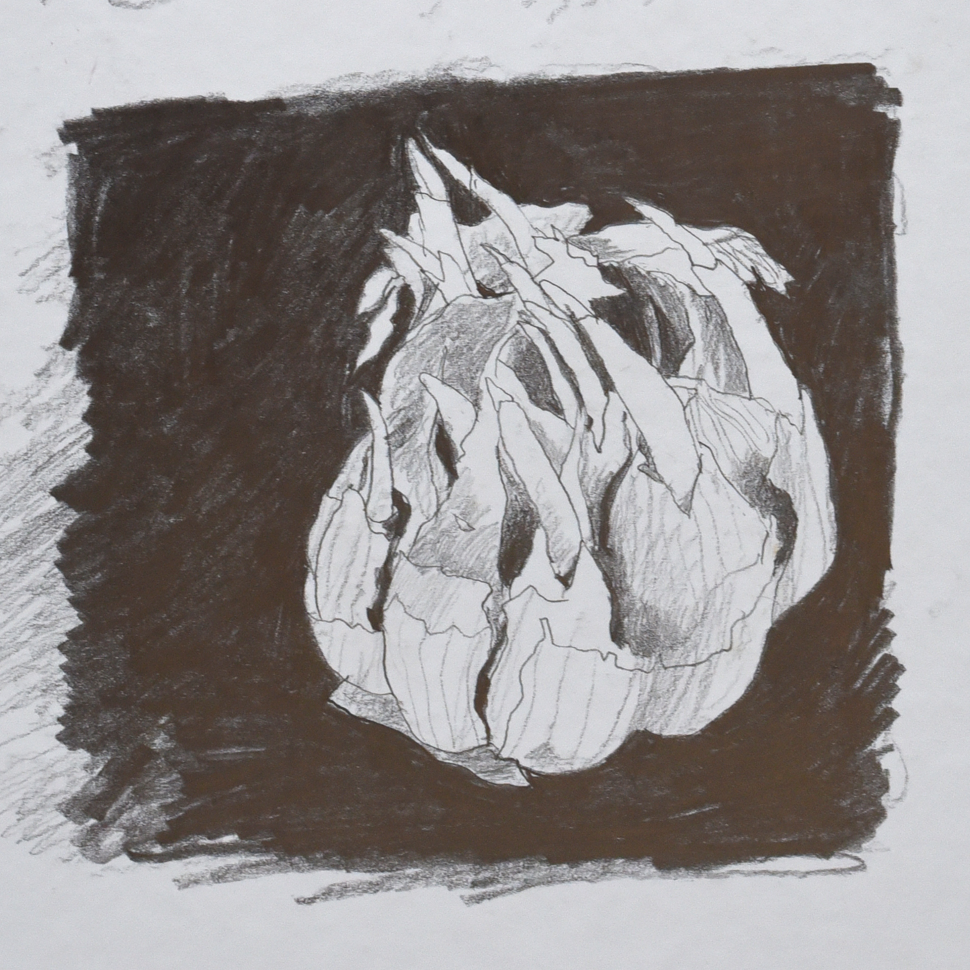 Charcoal drawing of a sprouting onion.