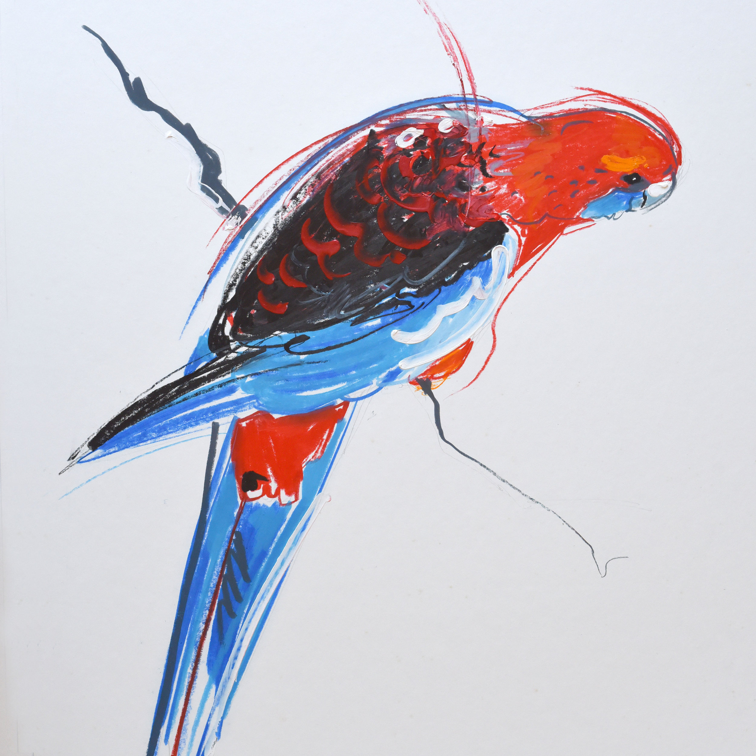 Painting of a red and blue Australian parrot using acrylic paint and stabilotone