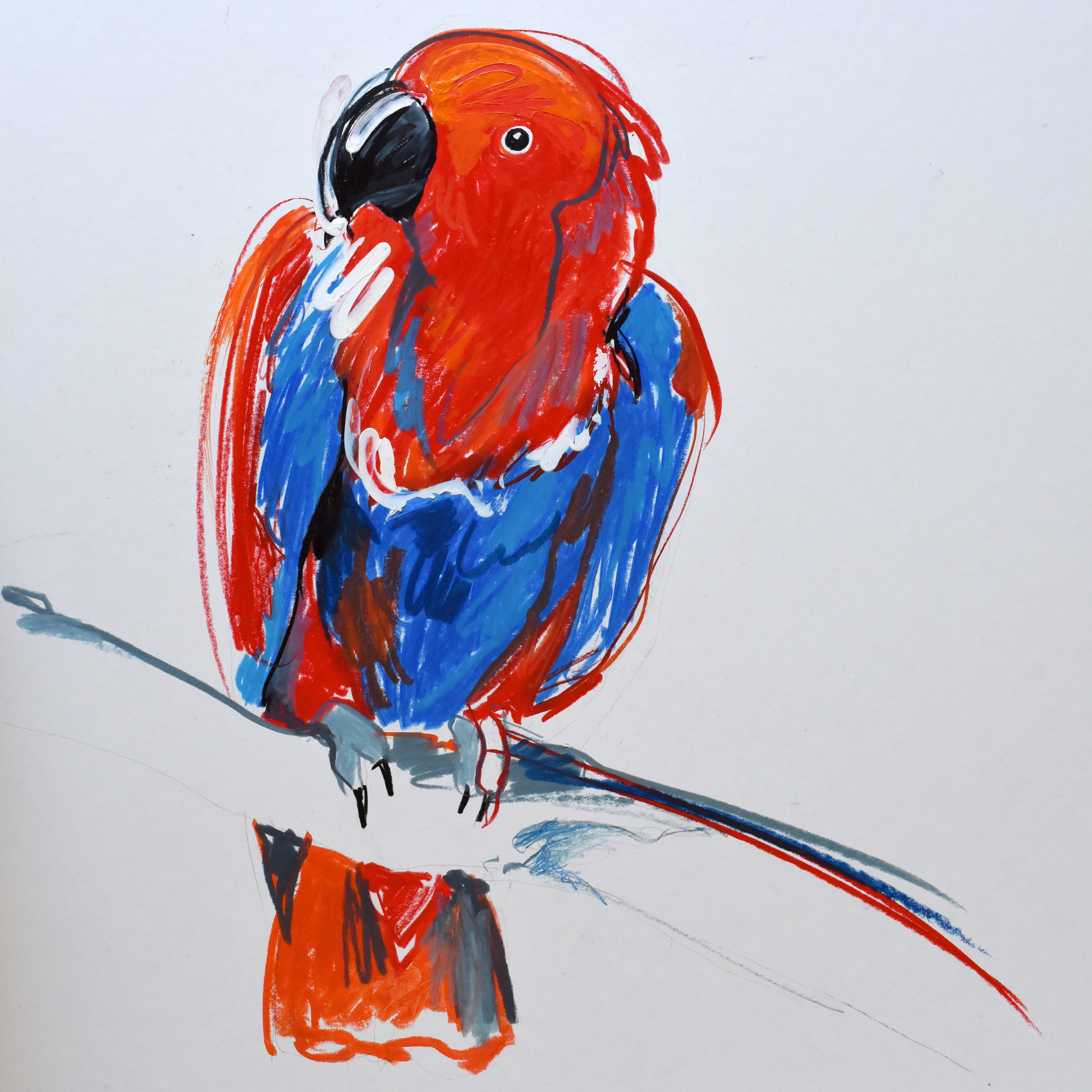 Crayon and pencil drawing of a red and blue parrot
