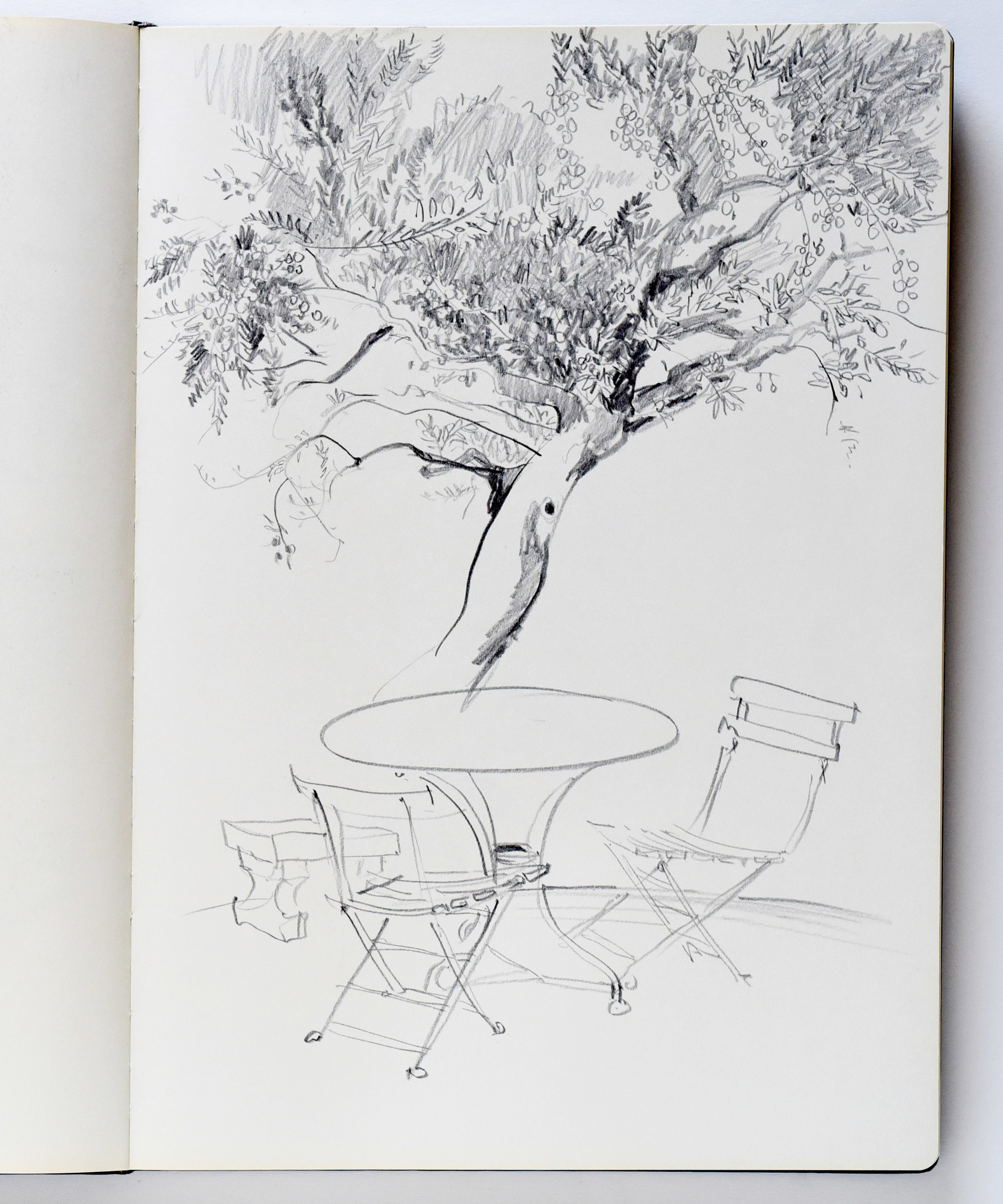 Pencil drawing of a table under an olive tree in Saint-Remy-de-Provence