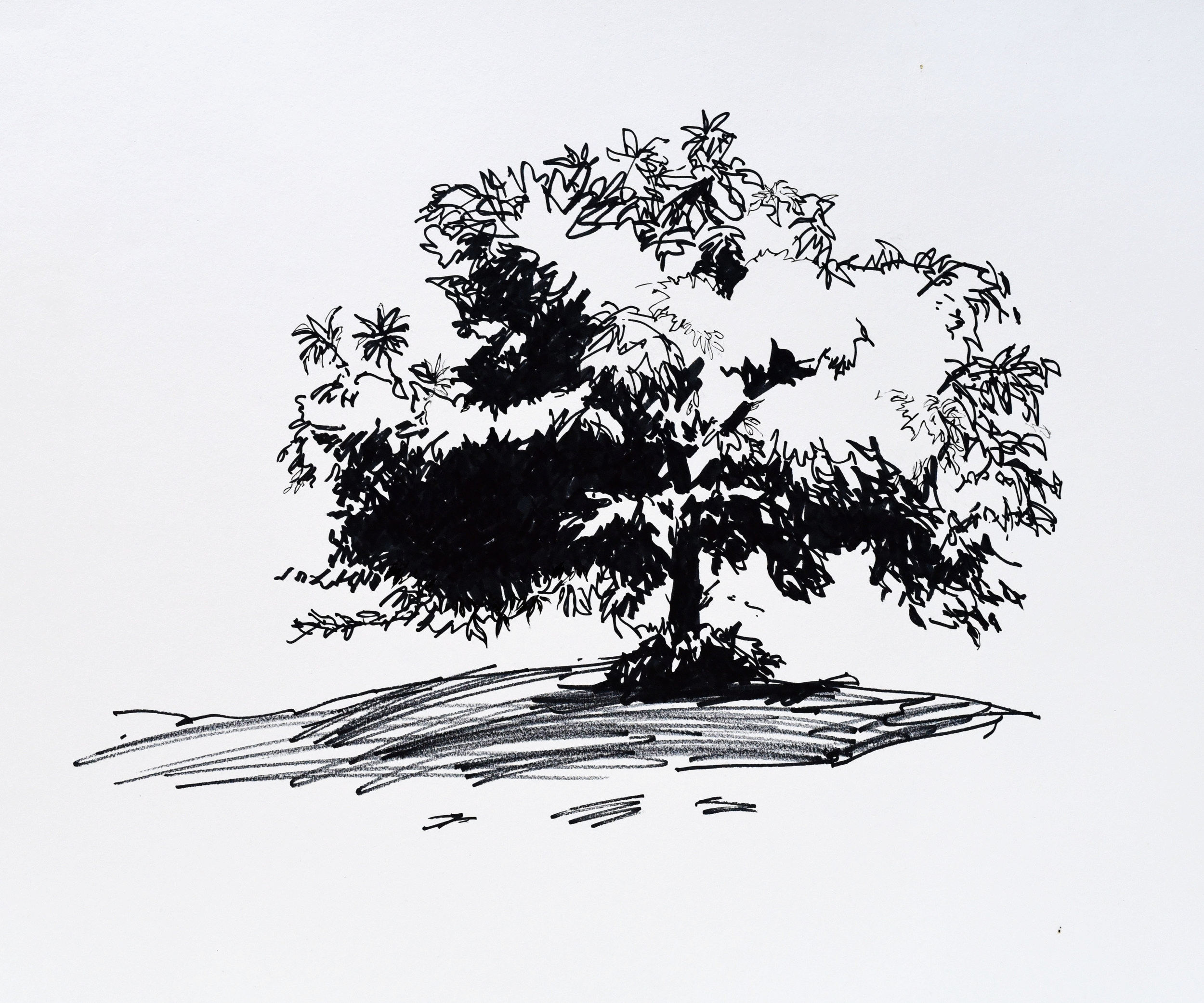 Black and white drawing of a chestnut tree at a vineyard in Victoria Australia