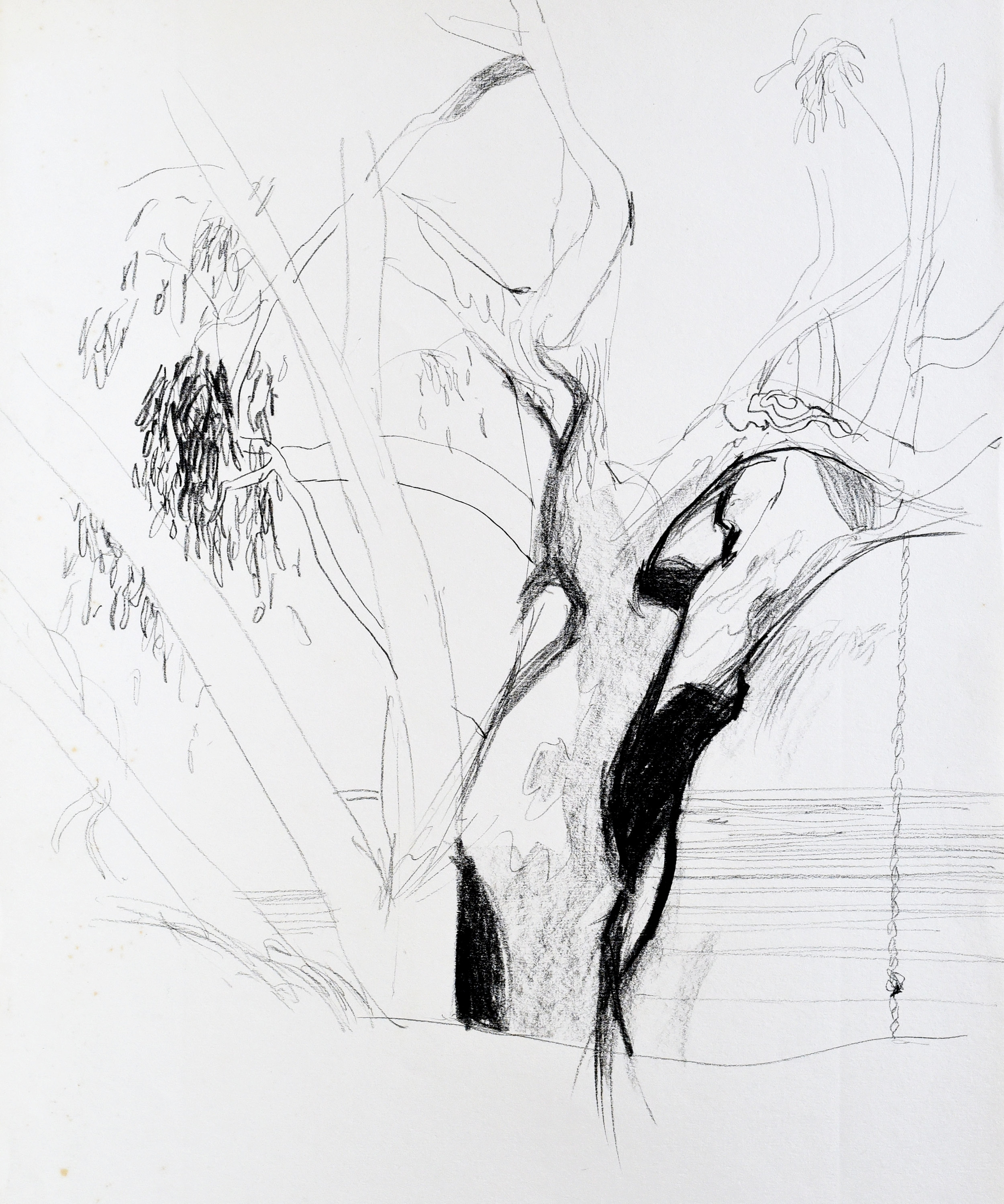 Drawing of a Murray River Gum in Australia using pencil and charcoal