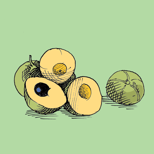 Food illustration of lucuma.