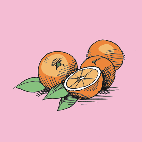 Food illustration of oranges.