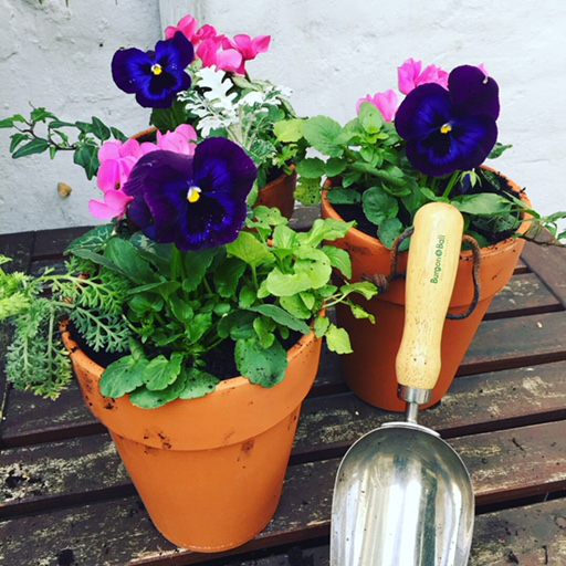 Winter gift pots1.JPG