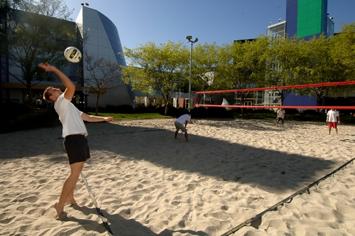 Google employees enjoying a game of volleyball at on Thurs afternoon.