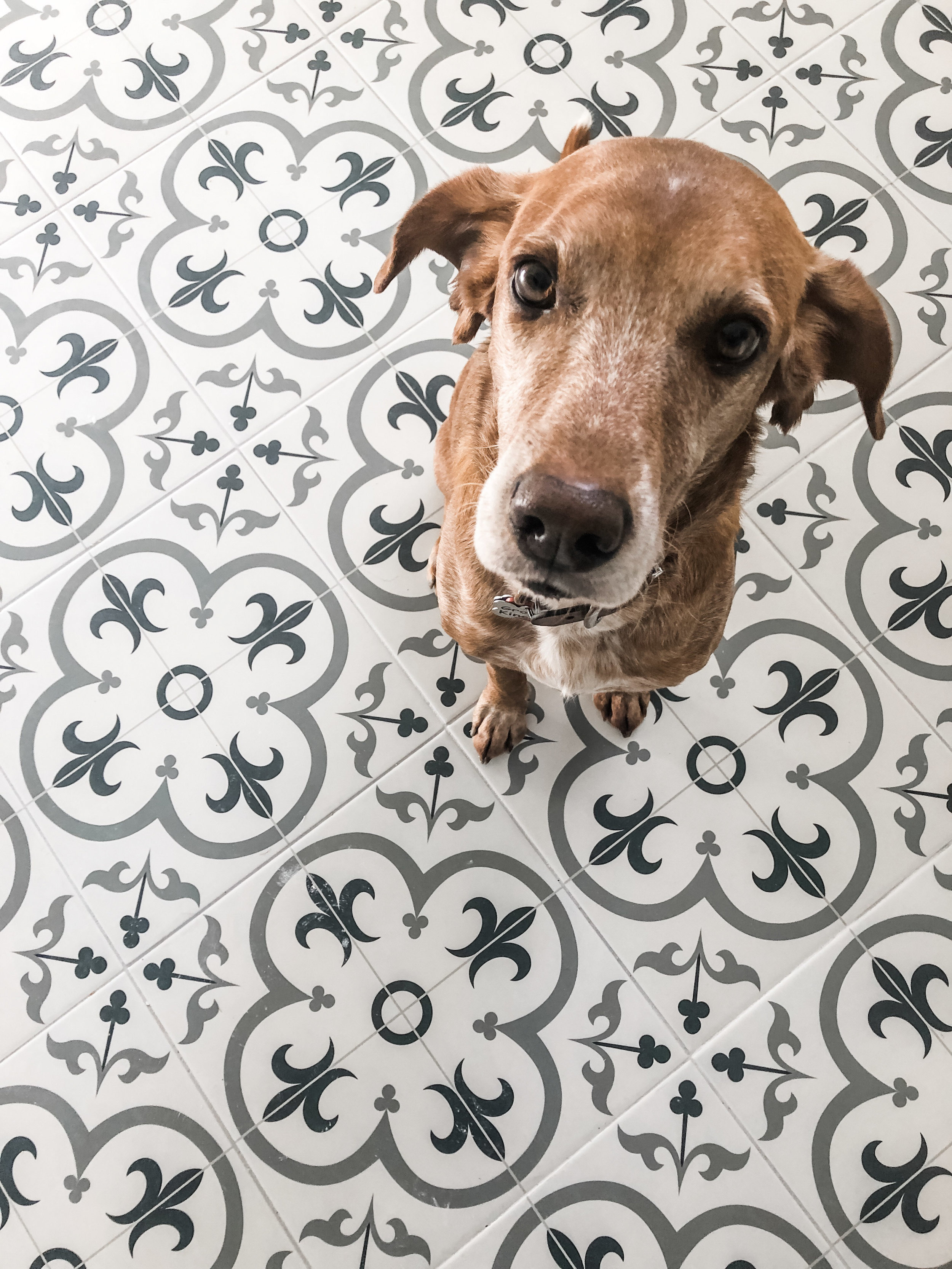 Grover and our new kitchen floors. This was taken the same day everything was finished. G is a pup who doesn't like change, so he sure is expressive in how he feels.