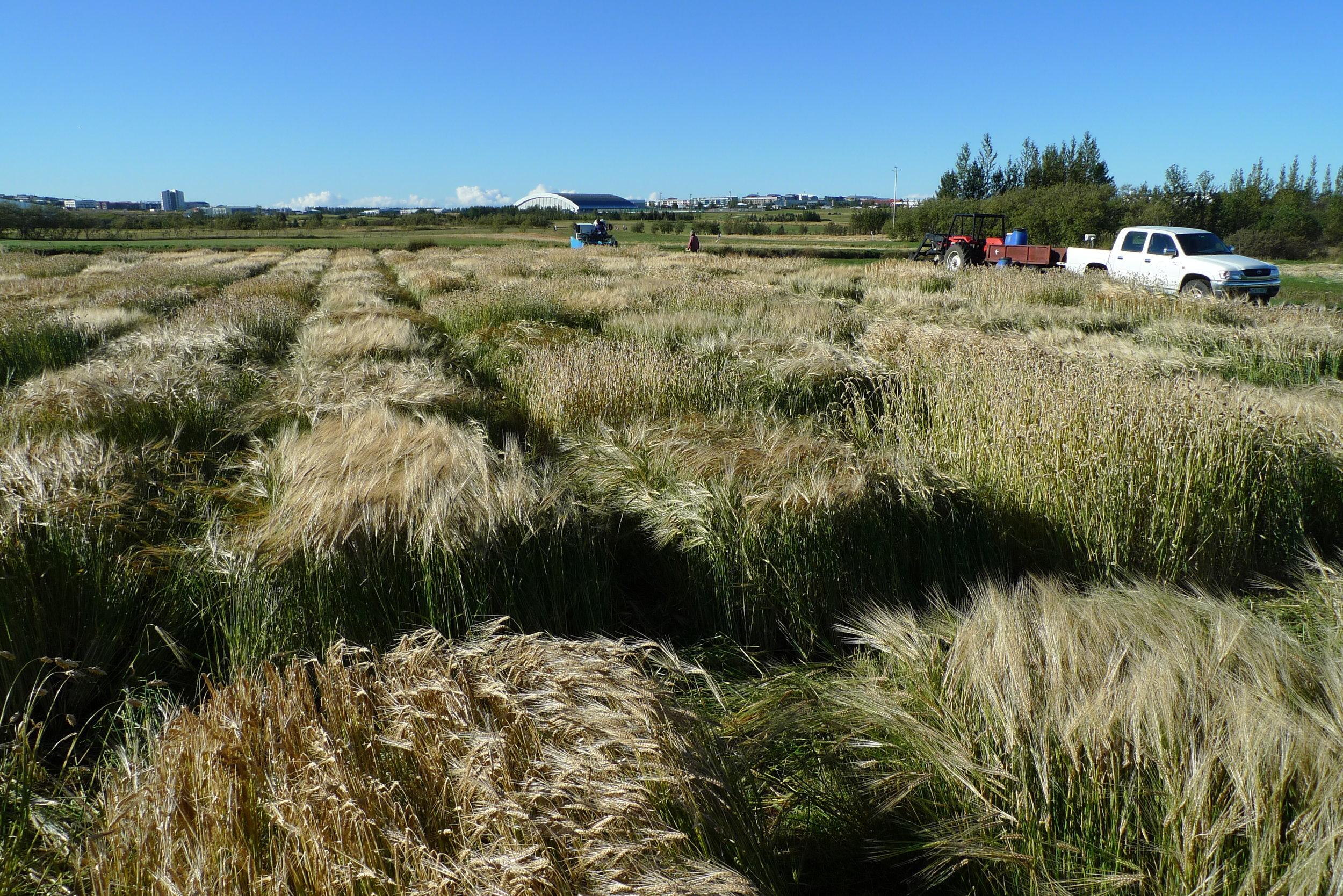 PPP Iceland 2012 Harvest 19 Sep MG.JPG
