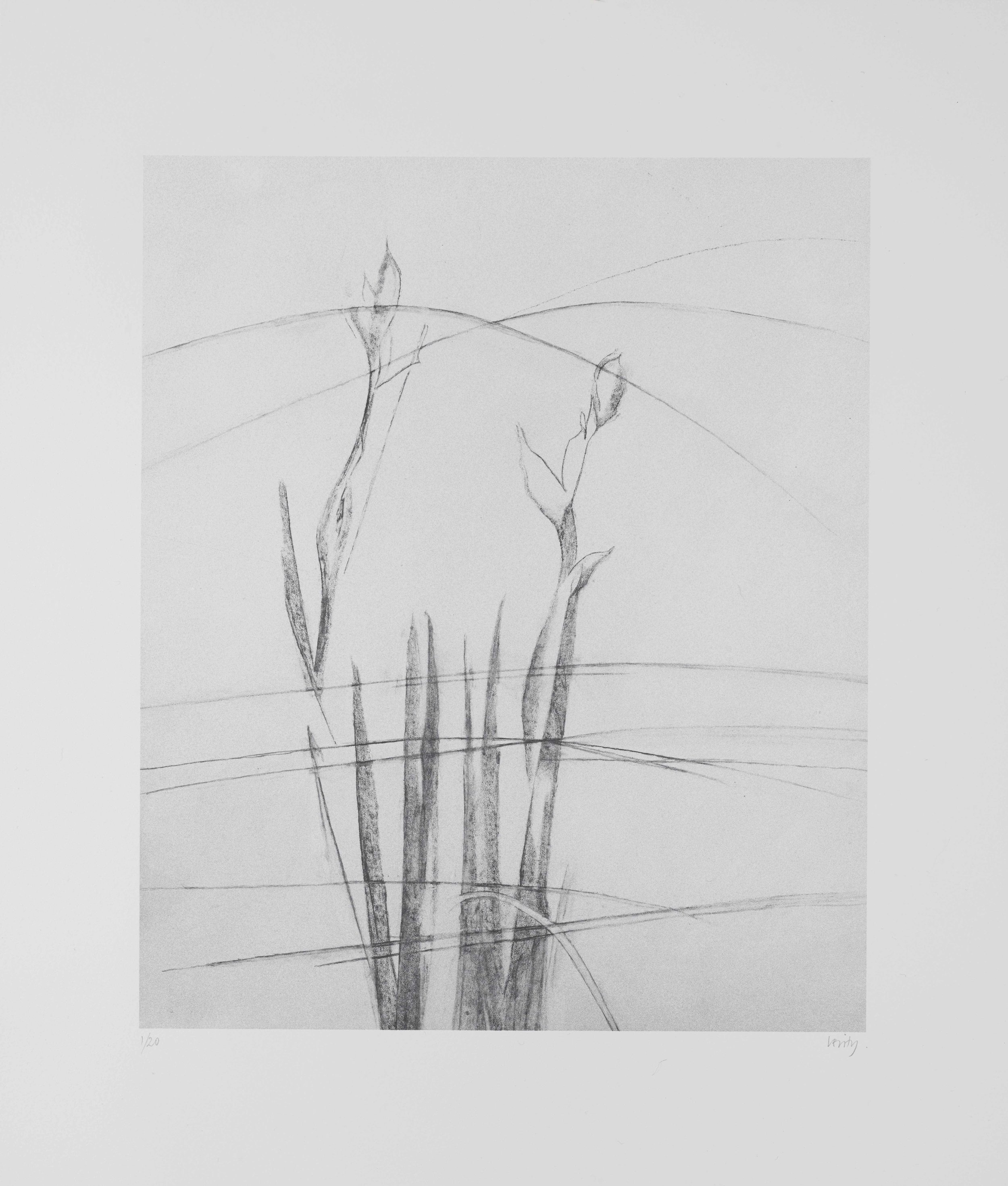 Irises and Grasses  2017  lithograph  41 x 35 cm