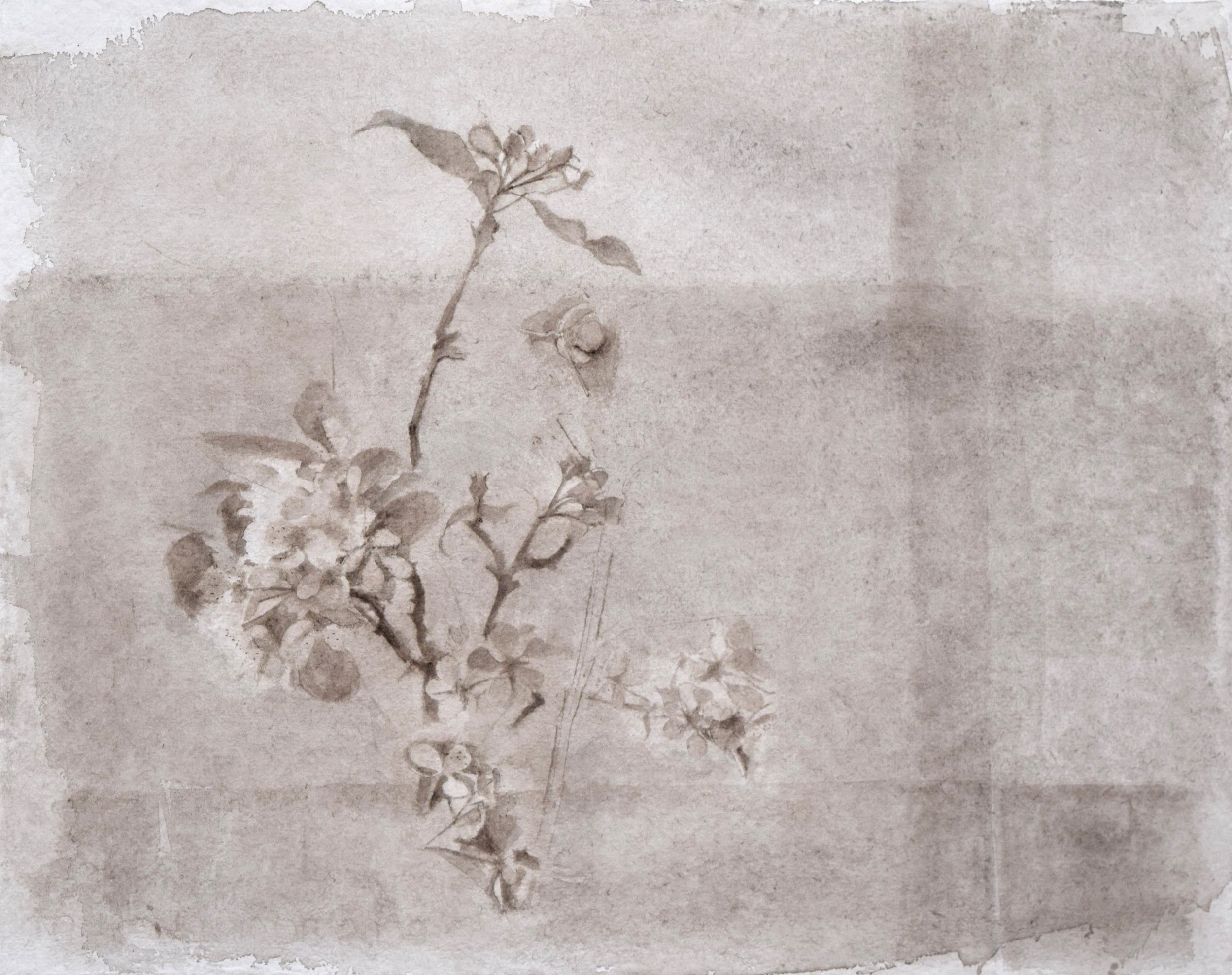 Pear and Apple Blossom_may 2013.jpg