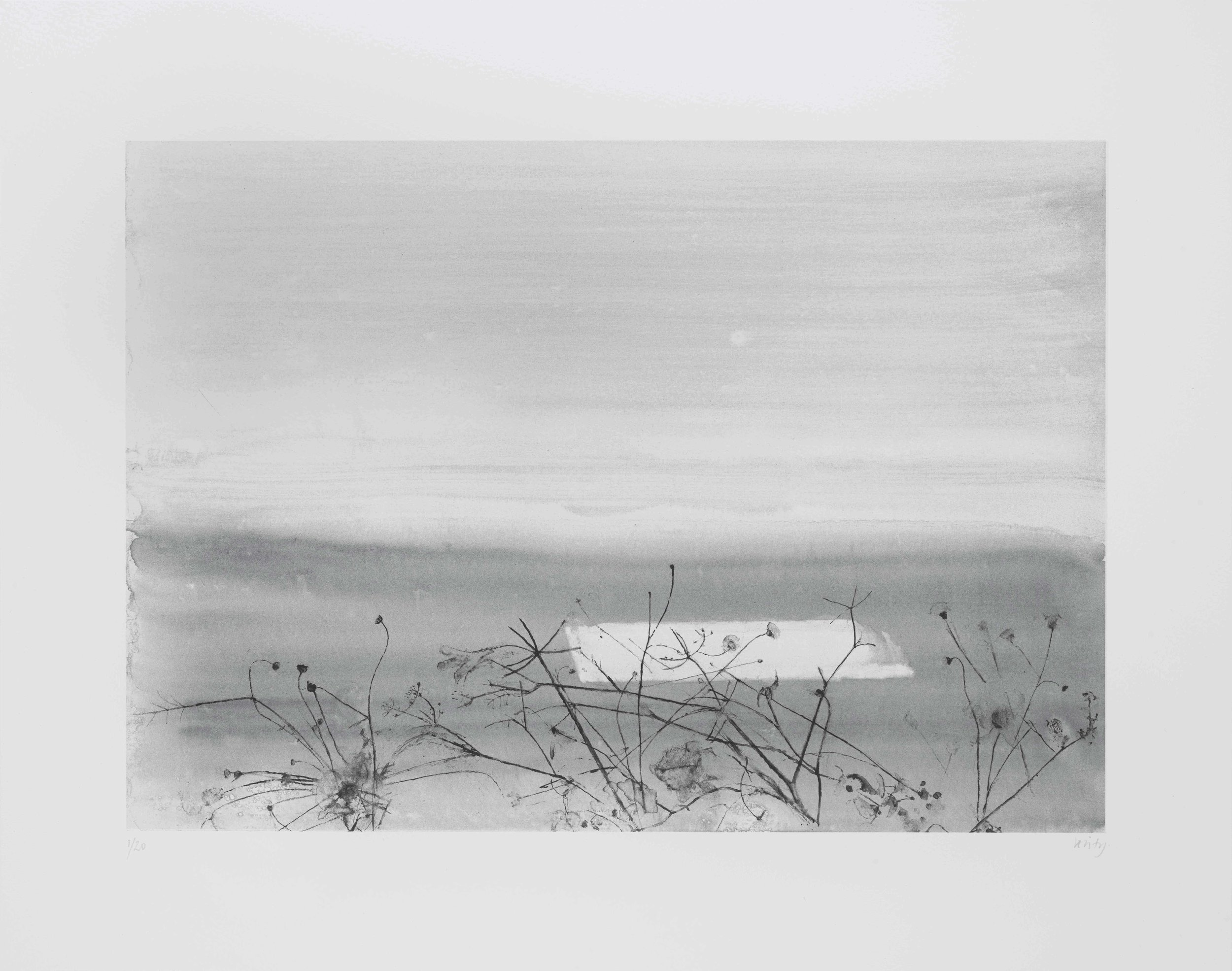 Summer Growth  2017 lithograph 38 x 48 cm