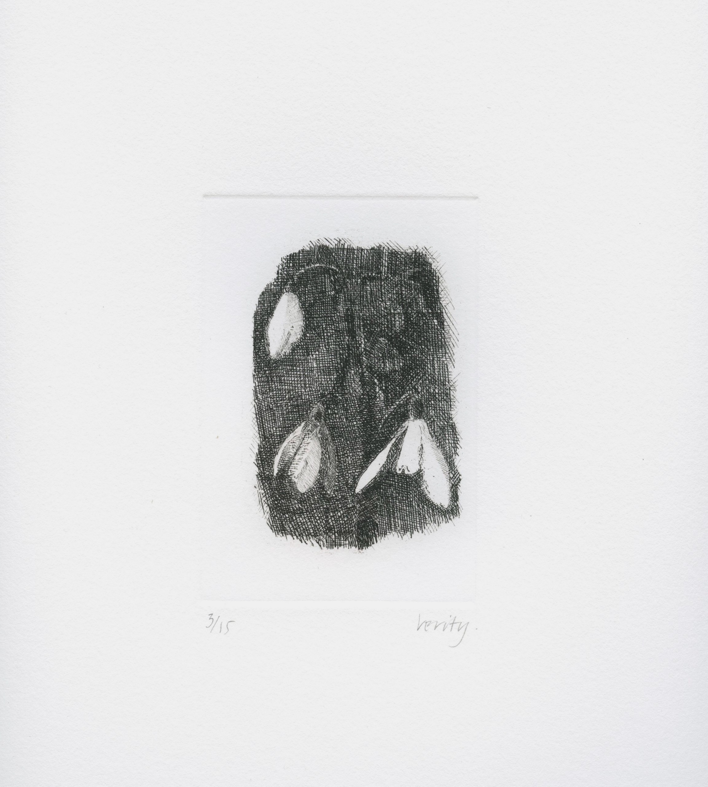 Snowdrops  2006 etching  32 x 25 cm