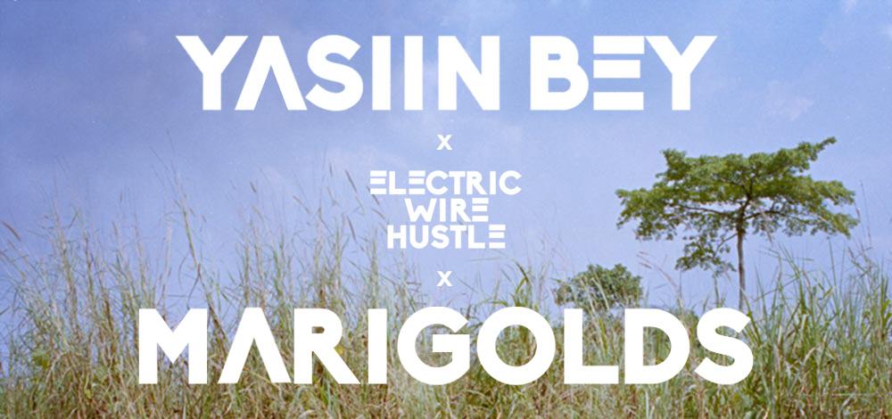 Marigolds-cover-3.jpg