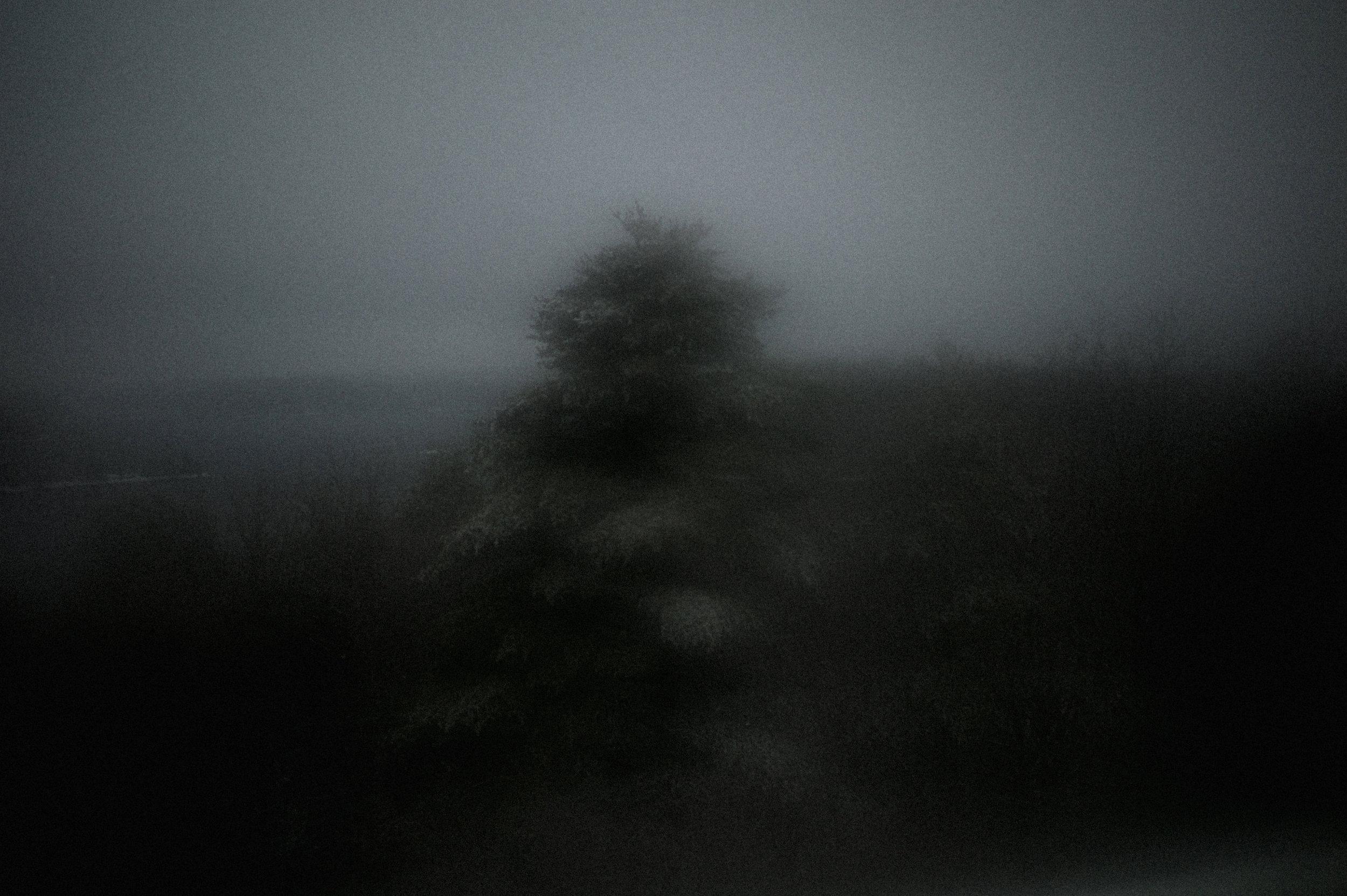 Light Painting On Spruce