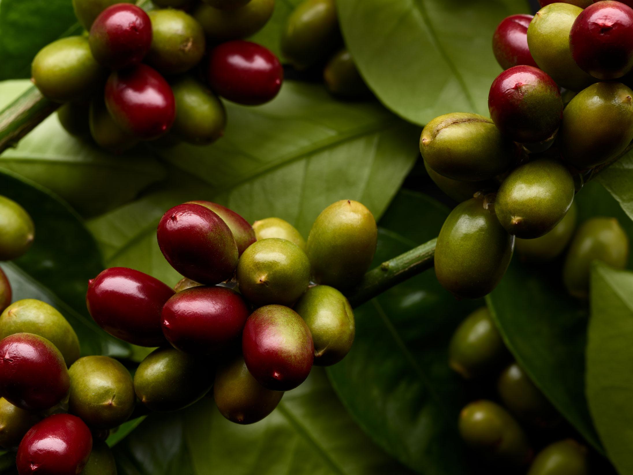 +++Bay-Header---Coffee_109963_V2_QC.jpg