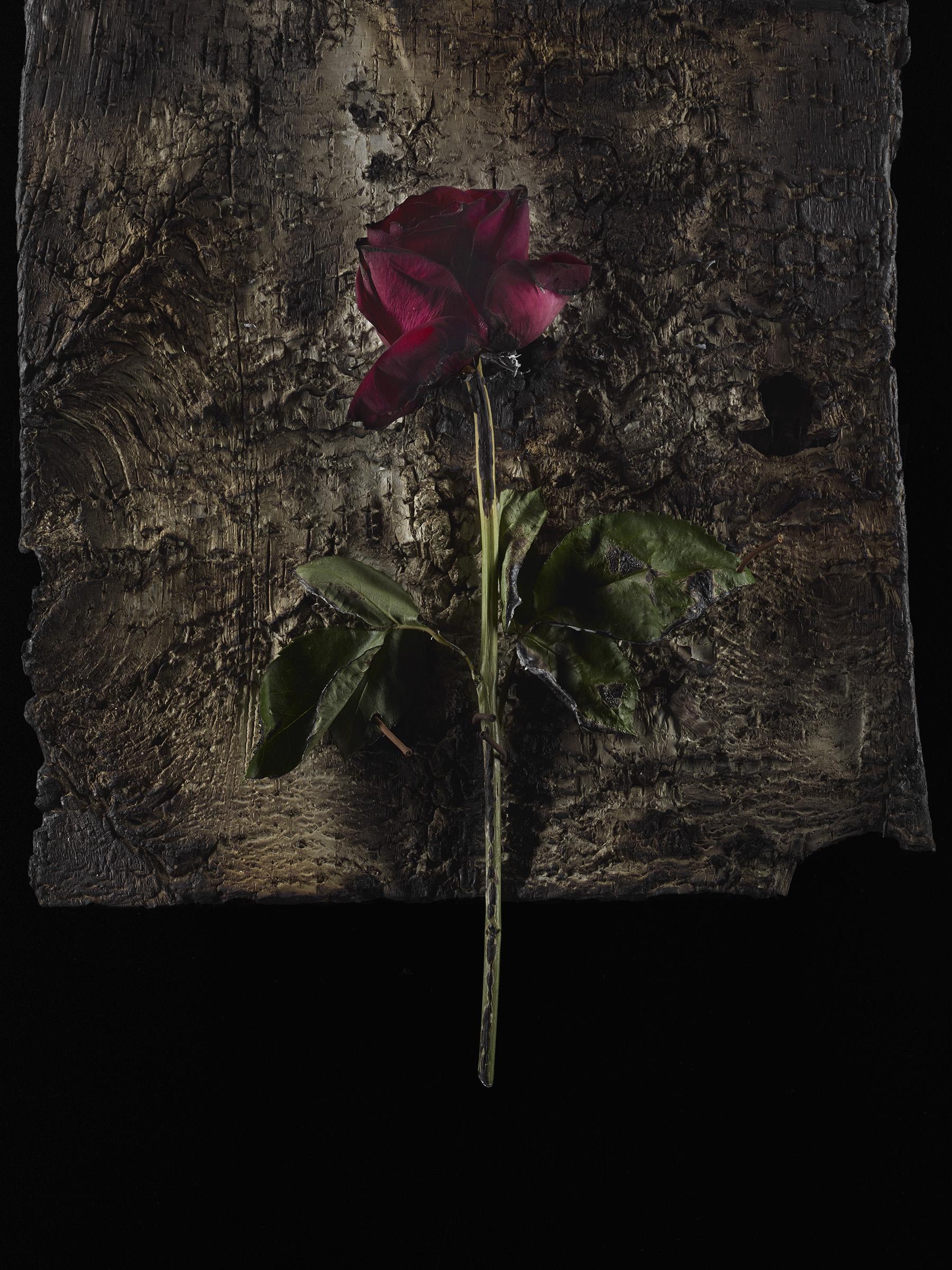 Burned_Roses-5.jpg