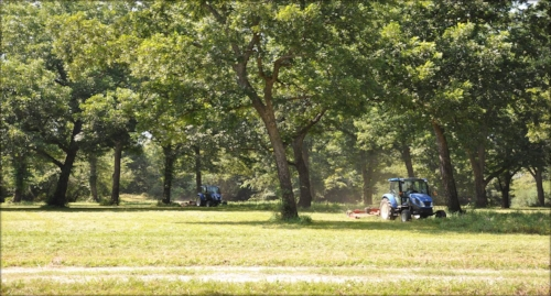 Justin and Jared cleaning up the pecan groves in late-summer in preparation for fall harvest.