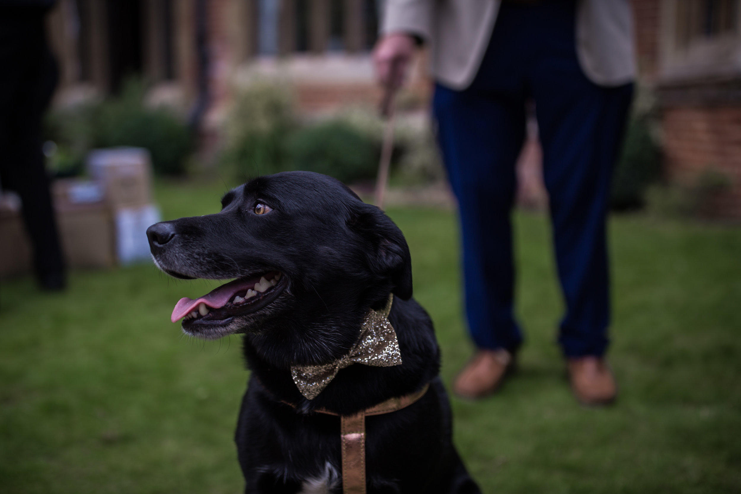 The gorgeous Molly, beloved pet pooch and star bridesmaid!   Image: Him & Her