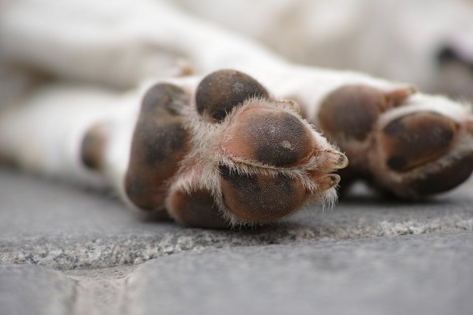 How to Treat a Cut on Your Dog's Paw Pad 2.jpeg