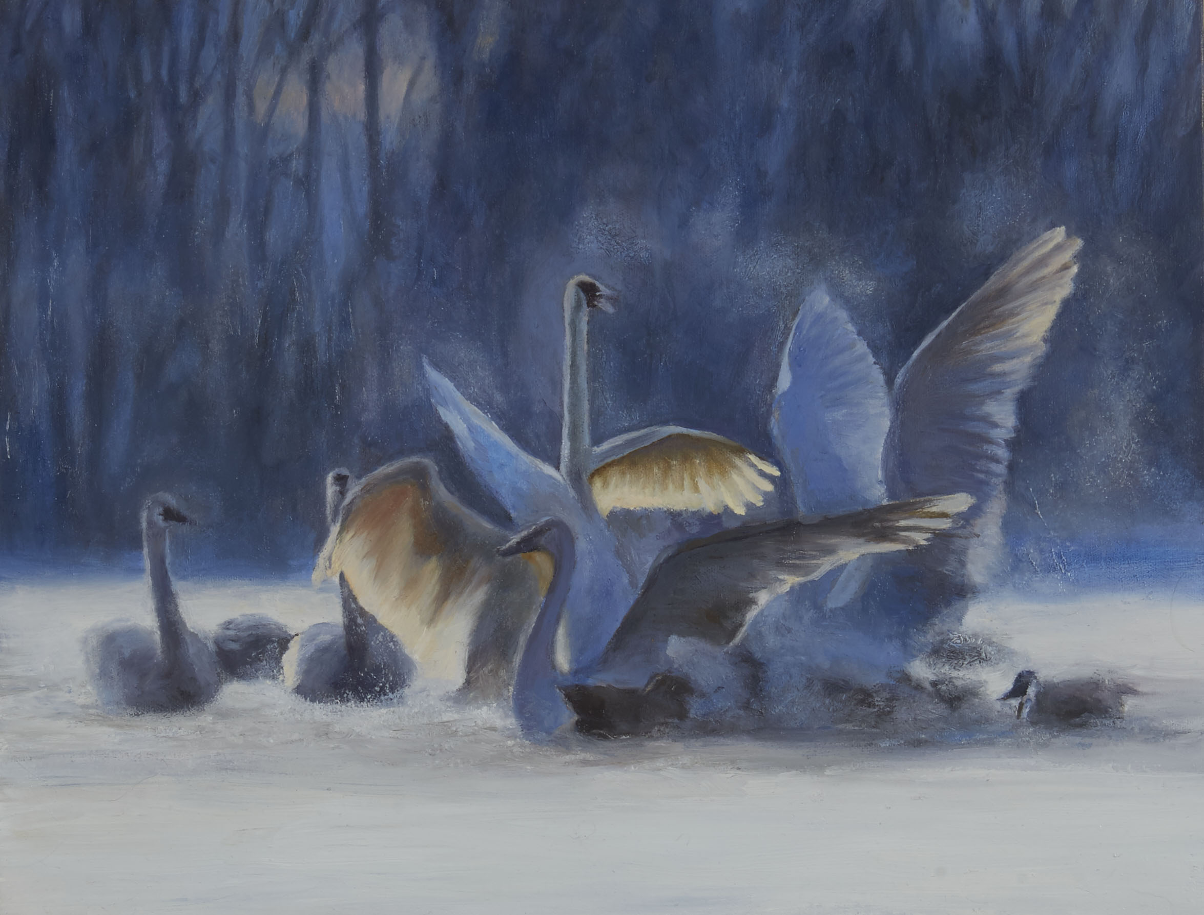 """Swans"" 2018"