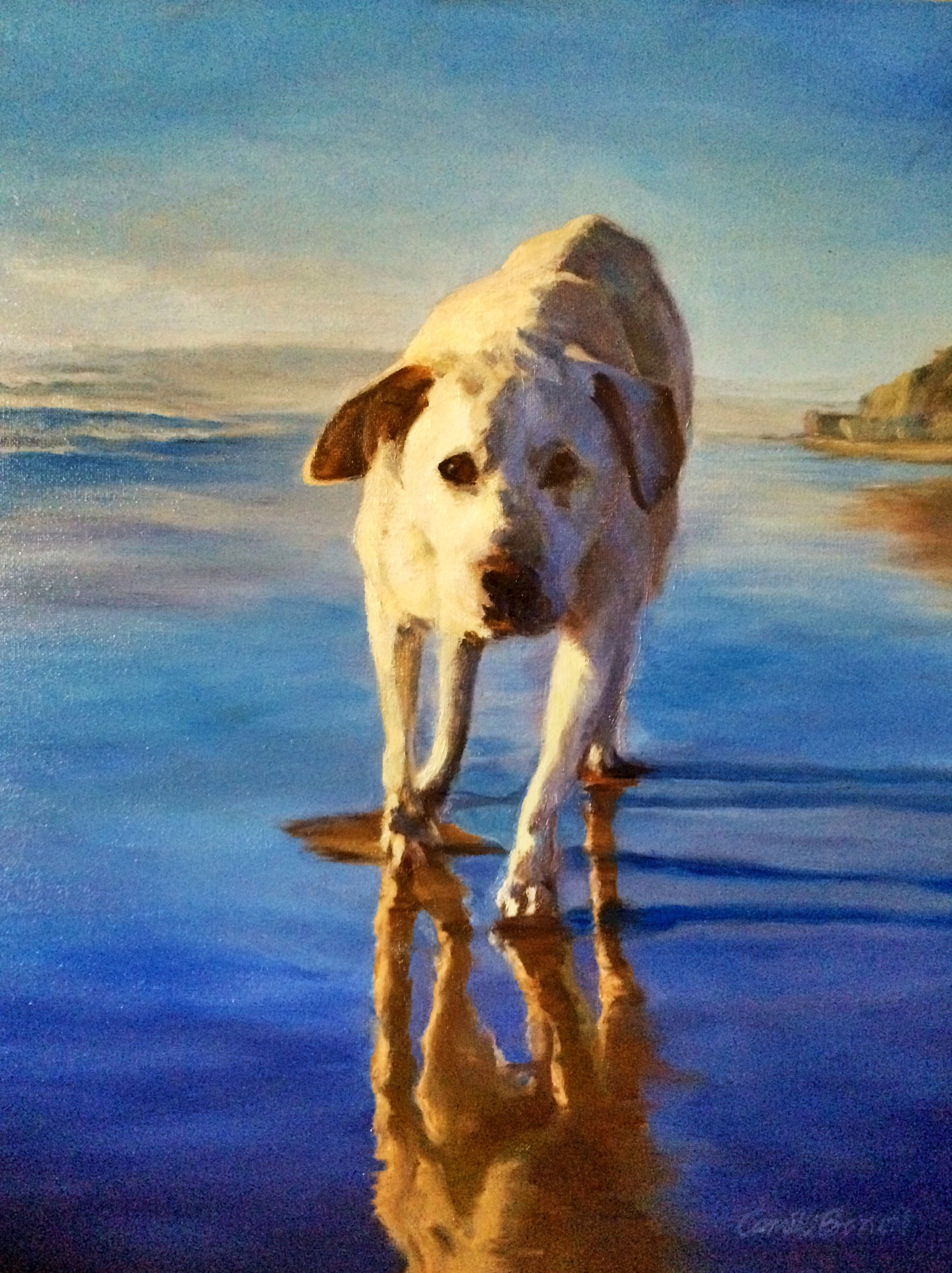 """White Lab on Beach"" 18"" x 20"" (2015)"