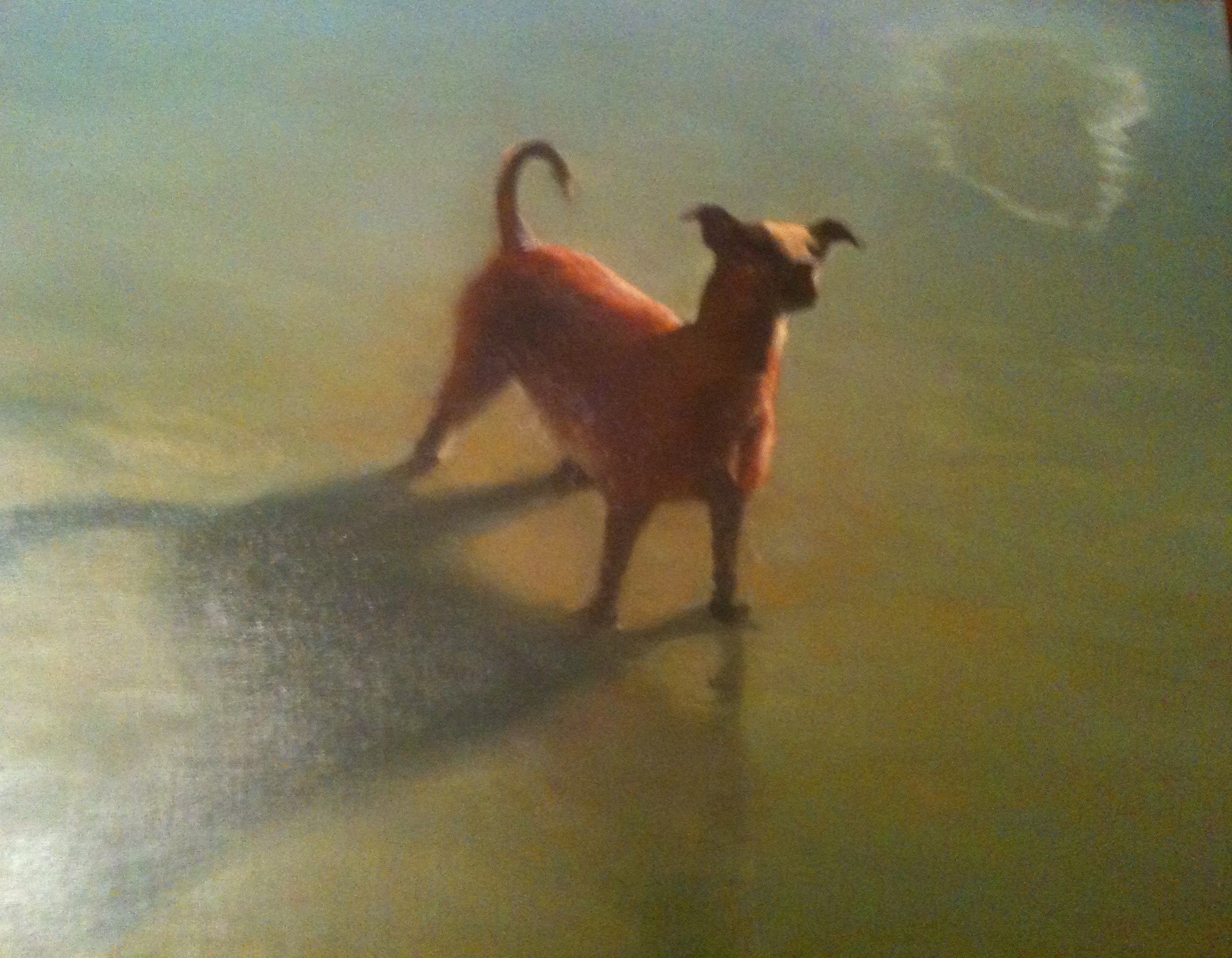 """Dog and Cloud Reflection"" 18"" x 20"" (2011)"