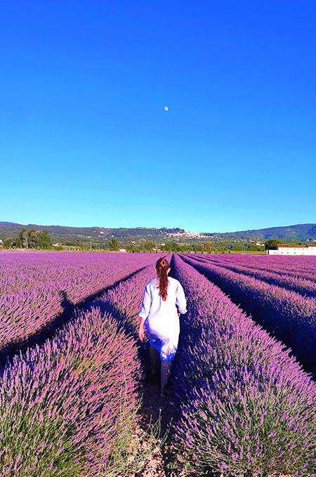 lavender2.jpg
