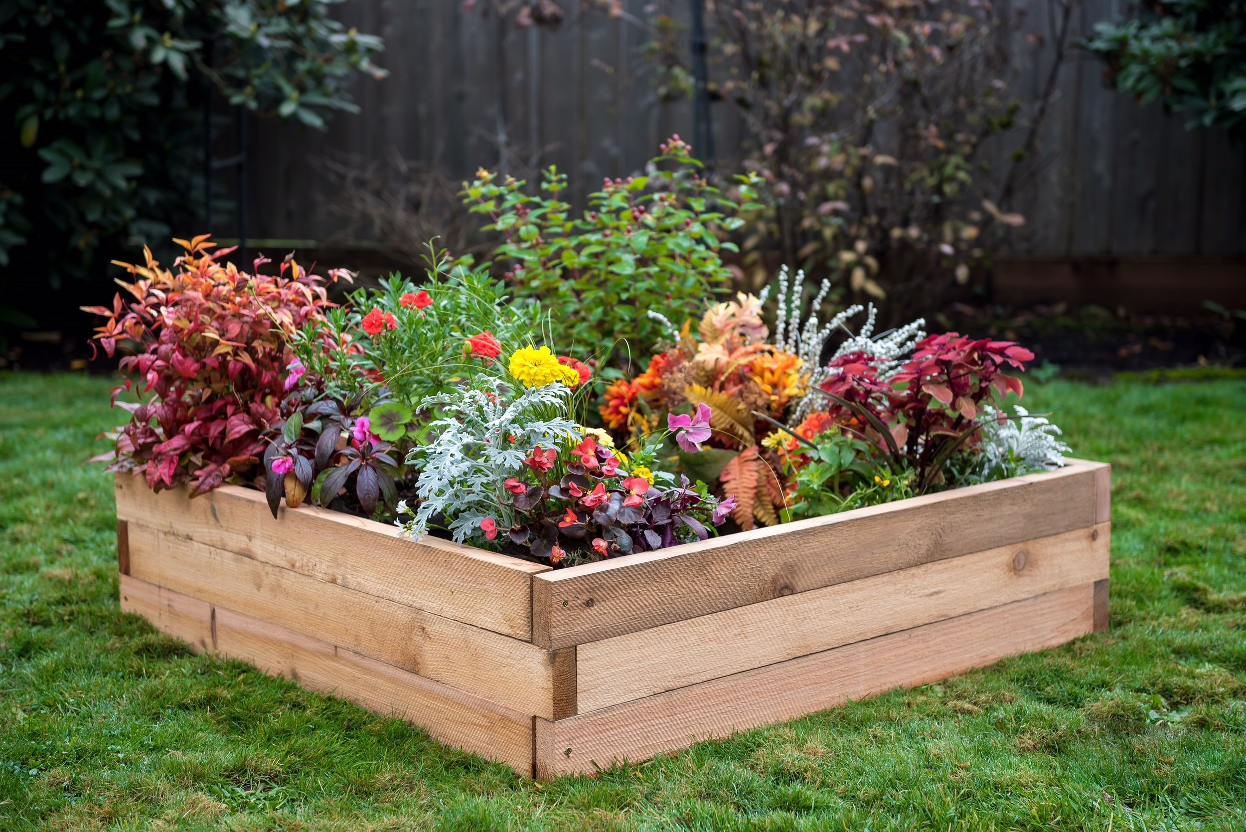 raised bed 4'x4'