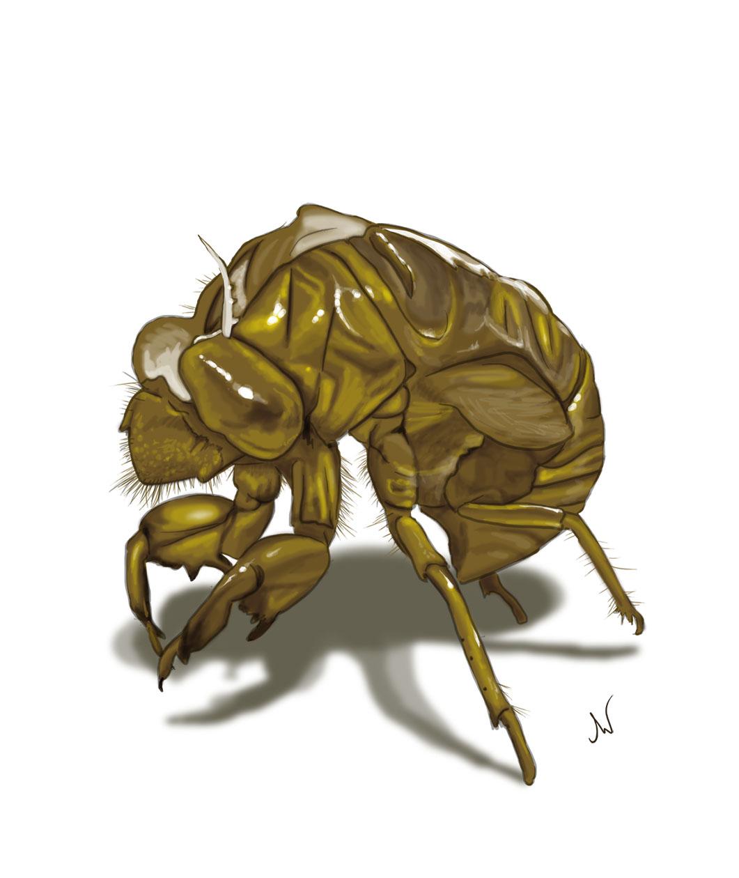 """Cicada Shell"""