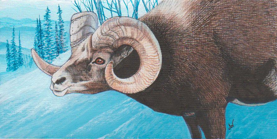 """""""Bighorn Ram"""""""