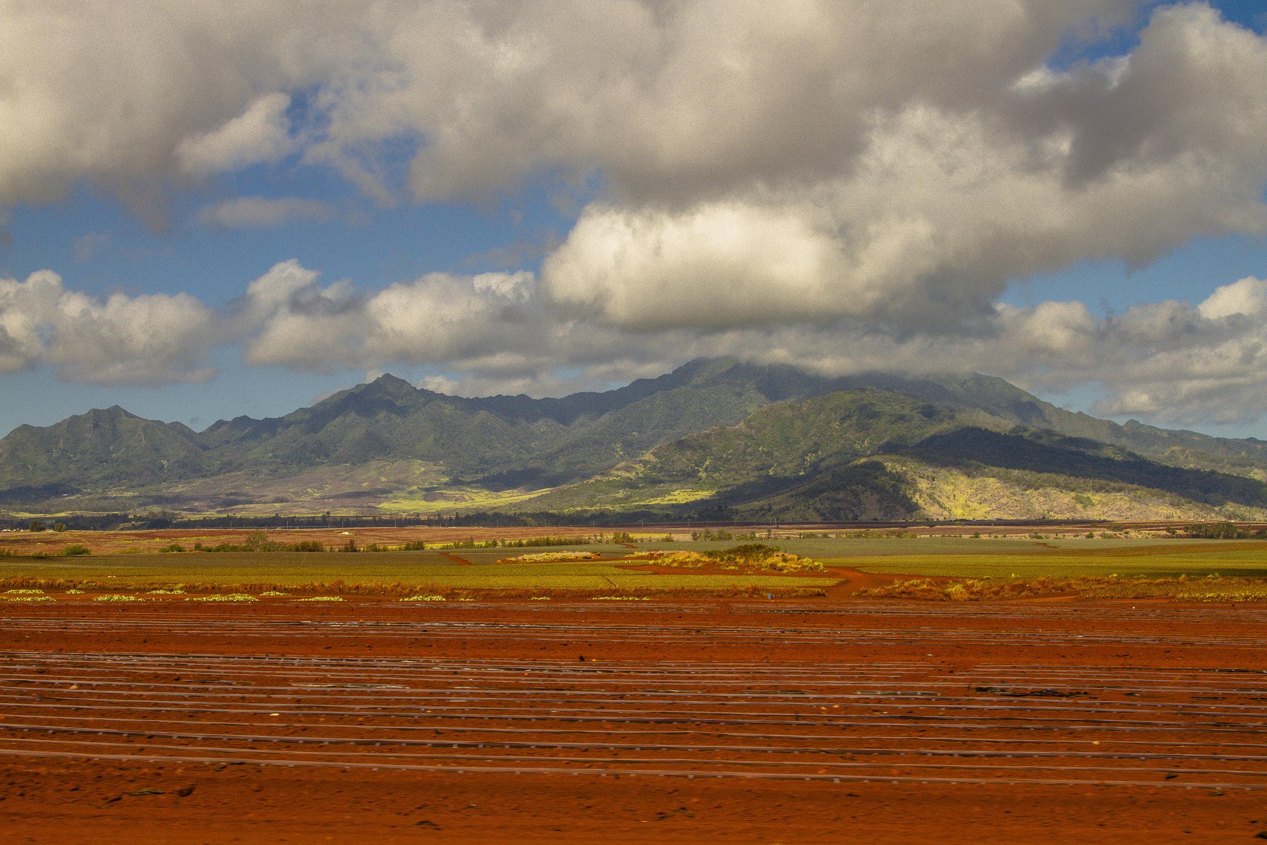 Hawaii_day2_003.jpg