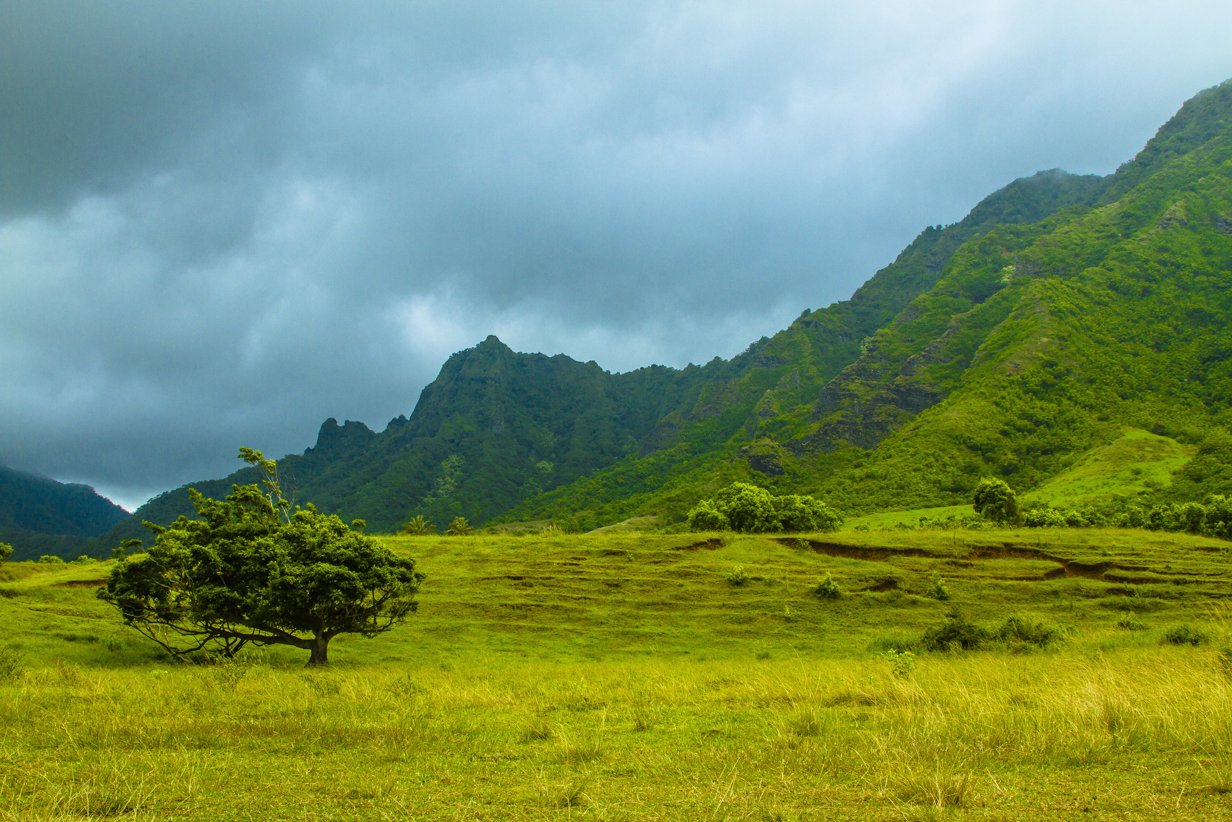Hawaii_day2_067.jpg