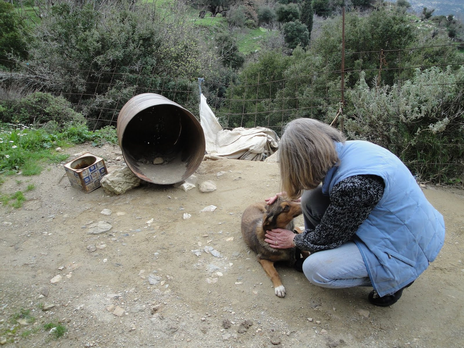 Carol Mc Beth discovered this 'barrel dog' in November 2009. In February 201 its health had deteriorated and in May 2010 the dog had disappeared. In September 2010 another dog was tied to the same barrel.