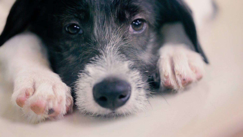 priceless-pets-adoption-964x644.jpg