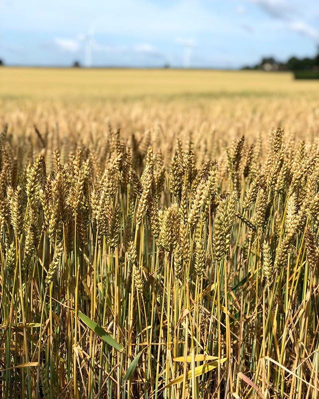 the wonderful winter wheat that makes @absolutelyx happen 🌾 #embraceeccentricity