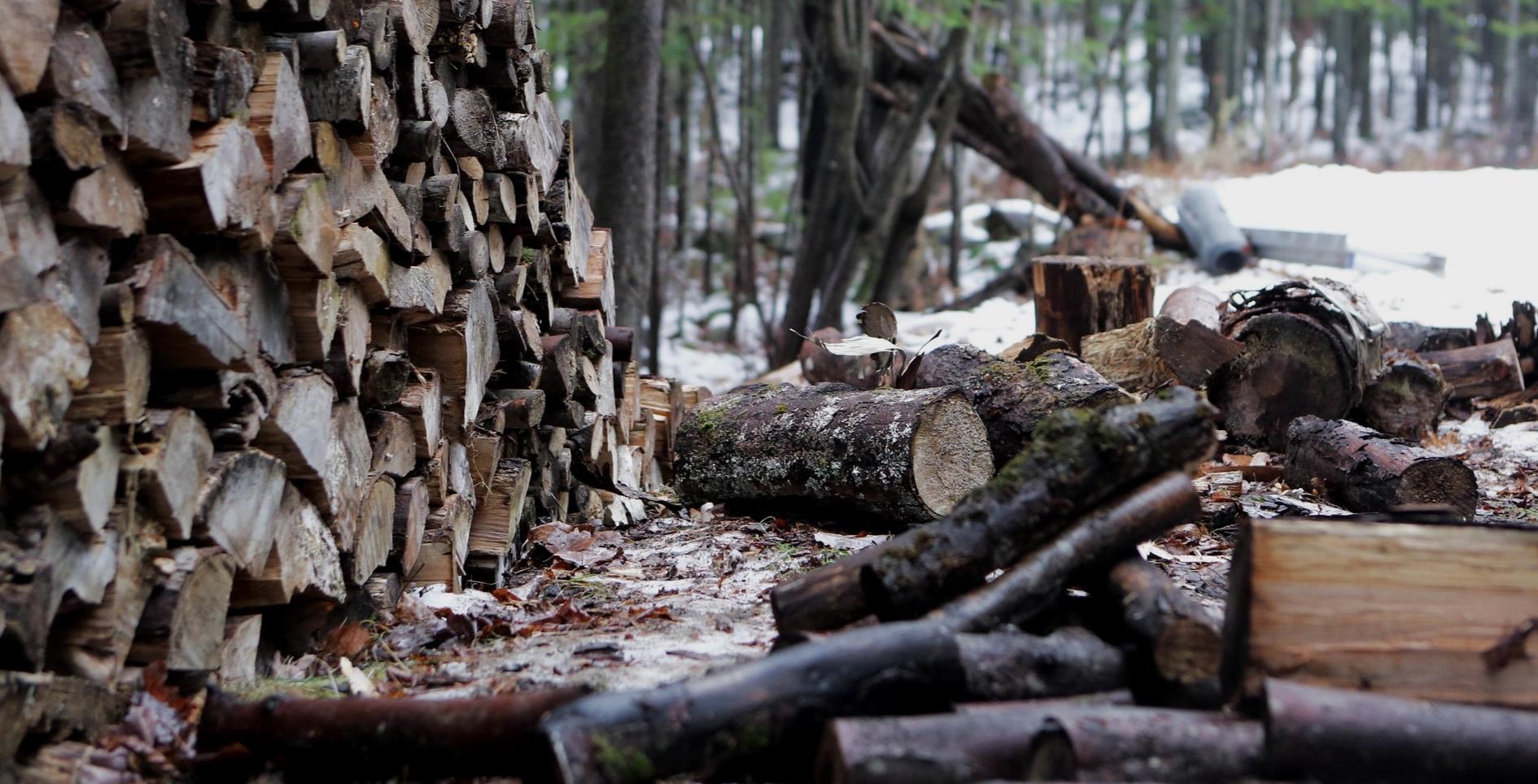 - Noch immer werden Urwälder, wie in Rumänien, Kanada und Indonesien, für die Papierproduktion gerodet. Aber auch Holz aus Plantagen und Wirtschaftswäldern ist nicht viel besser: An ihrer Stelle gab es früher extrem artenreiche und gut funktionierende Ökosysteme.