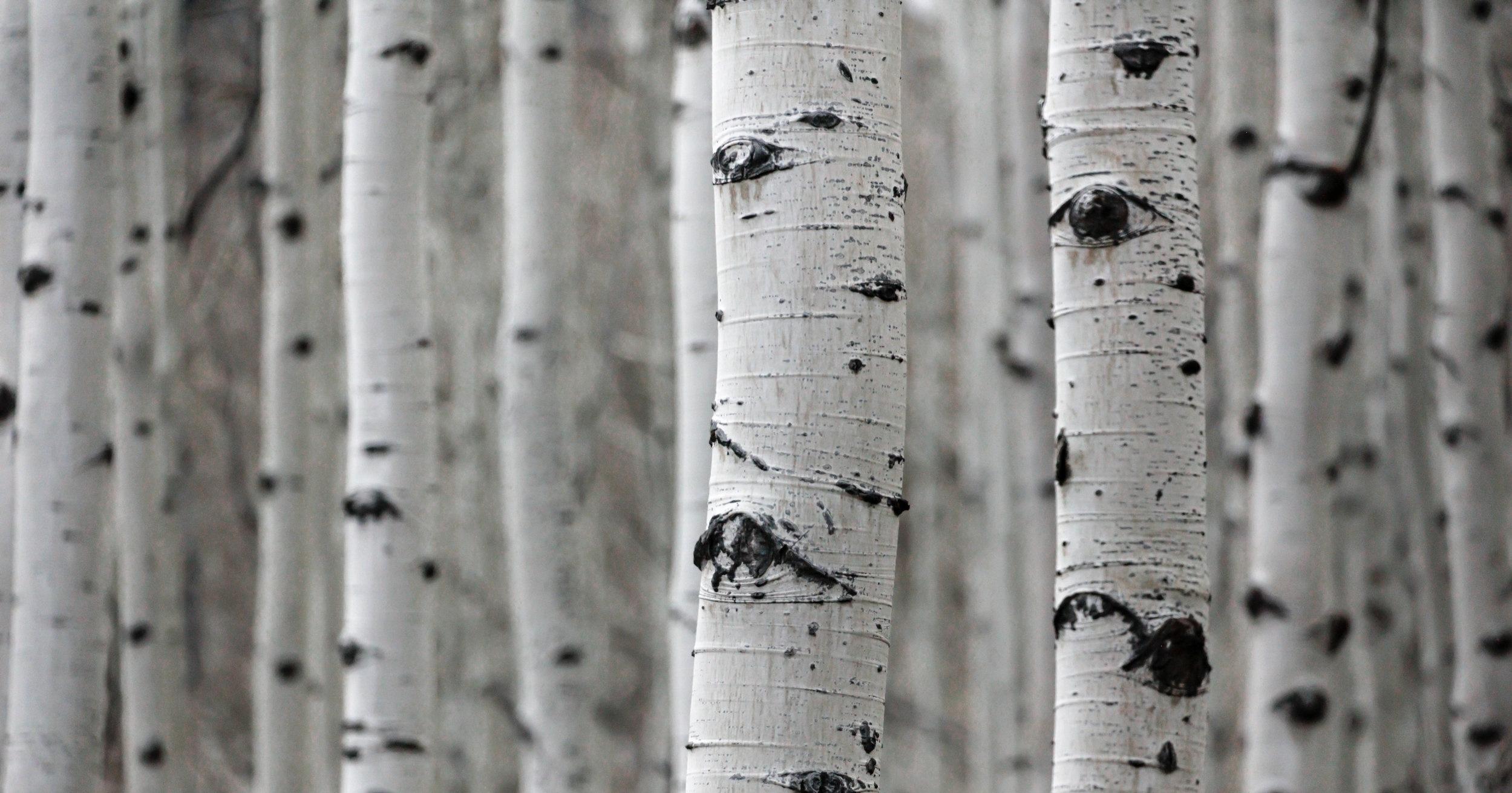 - Die Bewohner der Regionen, in denen im großen Stil Holz angebaut wird, verlieren ihre landwirtschaftlichen Flächen und werden durch die giftigen Fabrikabfälle gesundheitlich stark beeinträchtigt.