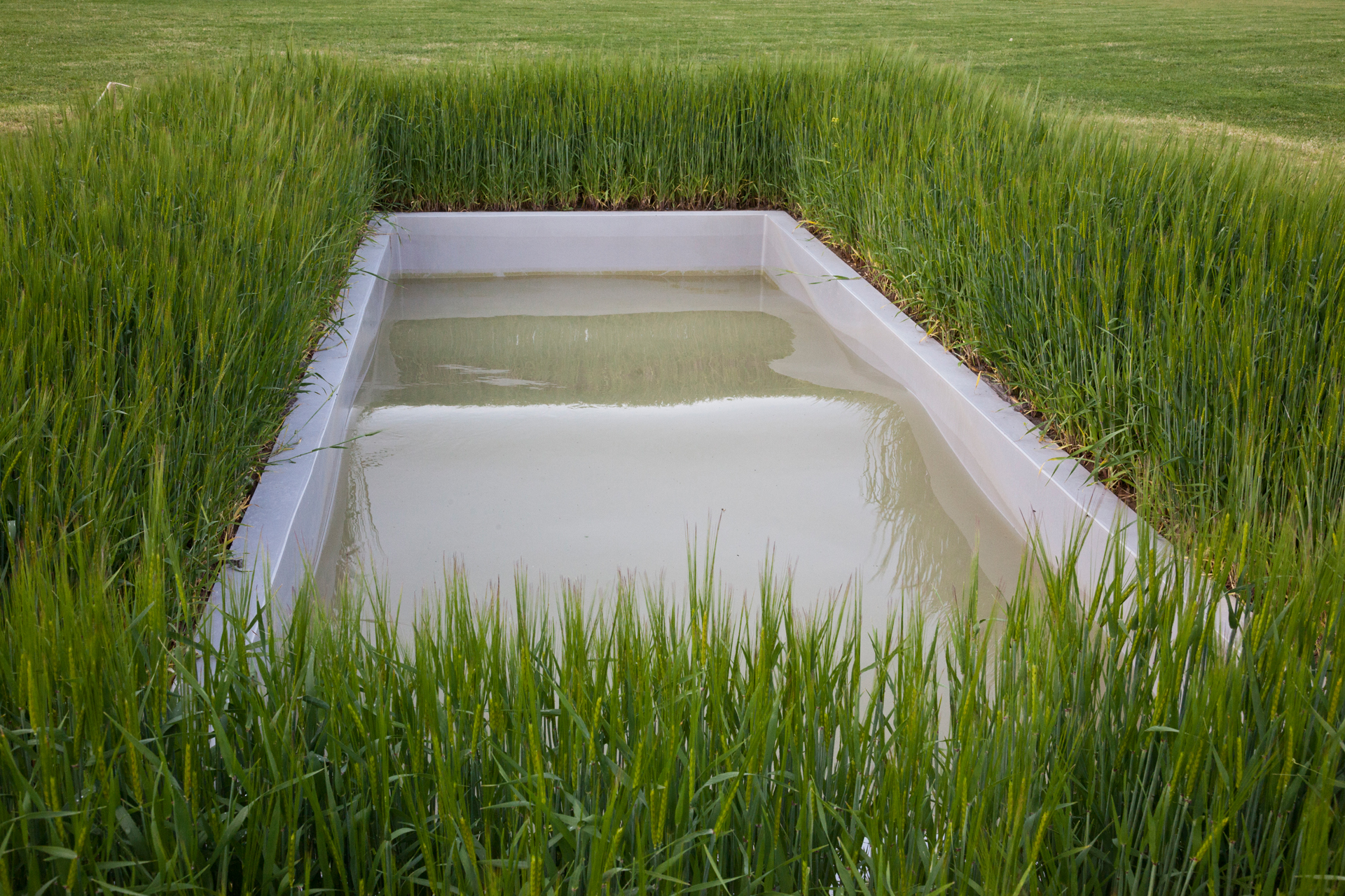 Italian artist Massimo Bartonlini creates environments of highly sensual interventions that gives the viewer contemplative, or subtly disturbing experiences, such as the work Untitled (Wave) for dOCUMENTA(13). It is a rectangular pool filled embedded in the ground, filled with water and surrounded by barley. In it a wave sways rhythmically back and forth, its constantly changing shape set in motion by a silent motor.  Kassel, Germany