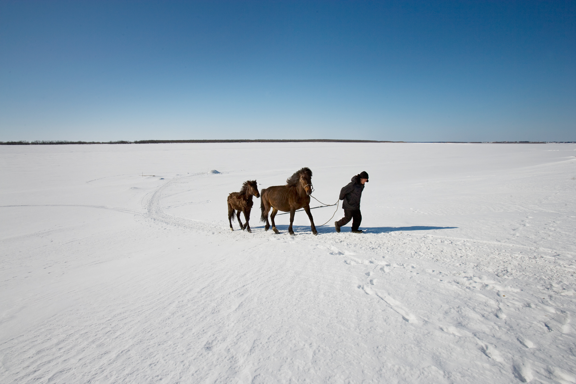 Near the Khanty village of Dyomino, Gena Navyukhov walks his horses across the frozen Northern Sos'va River.  Khanty-Mansiysk Region, Russia