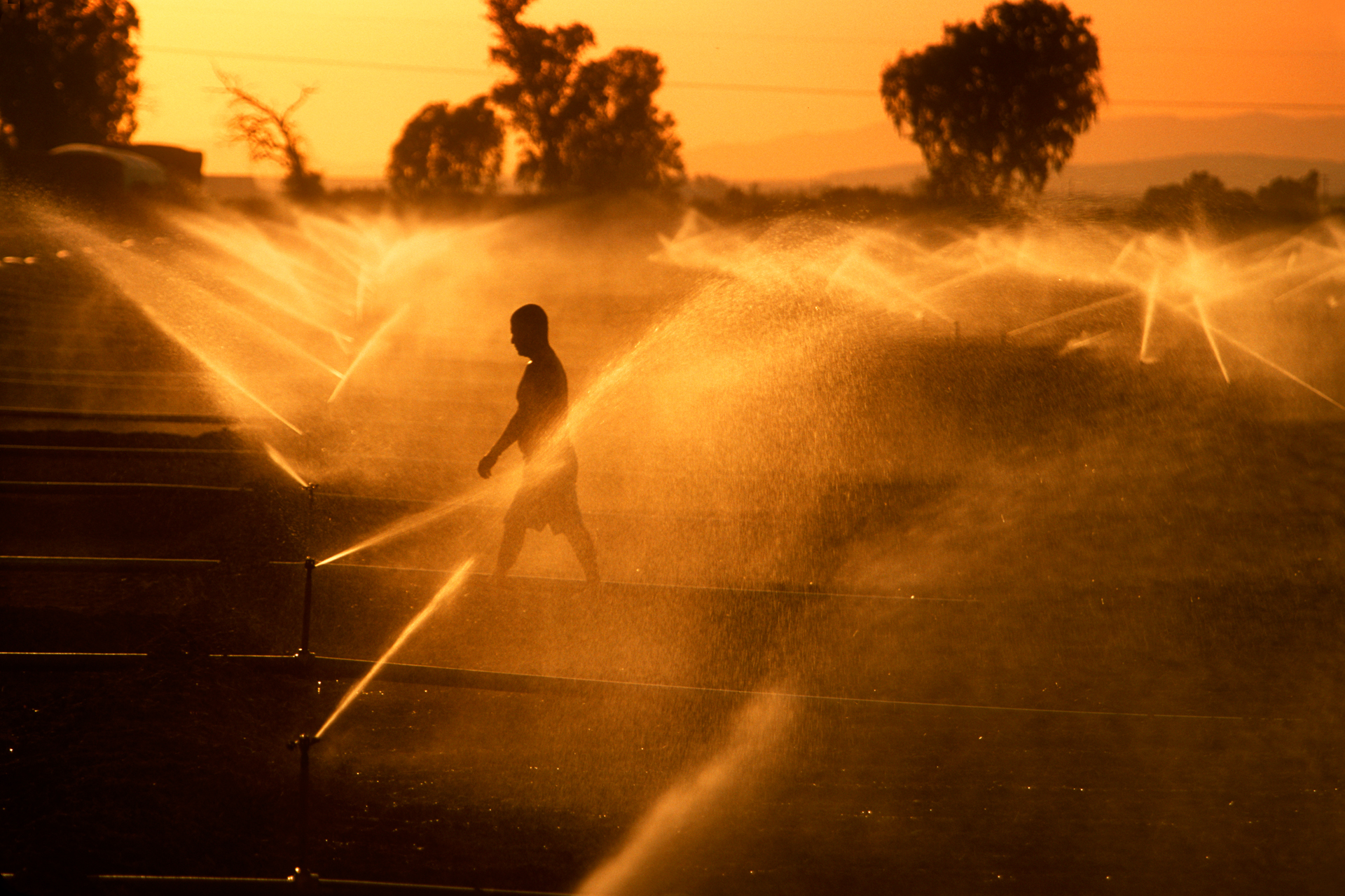 Maintenance of irrigation equipment is a daily priority. A Hispanic field worker fixes the sprinklers in an alfalfa field as the day ends.  Imperial