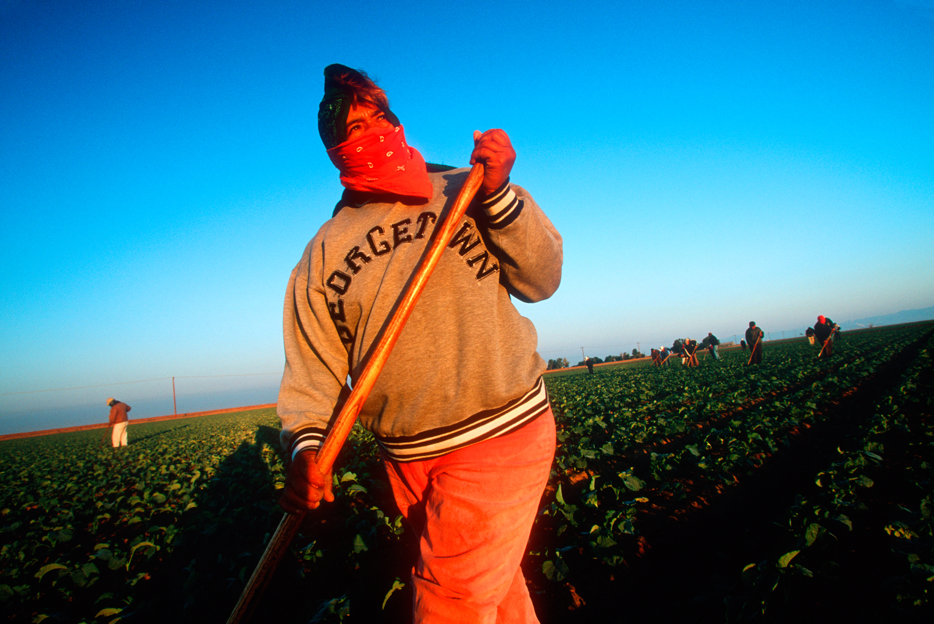 Hispanic workers in the Imperial Valley weed and thin a broccoli crop. These laborers will sometimes withstand over 120°F heat for minimum wage.  Westmoreland