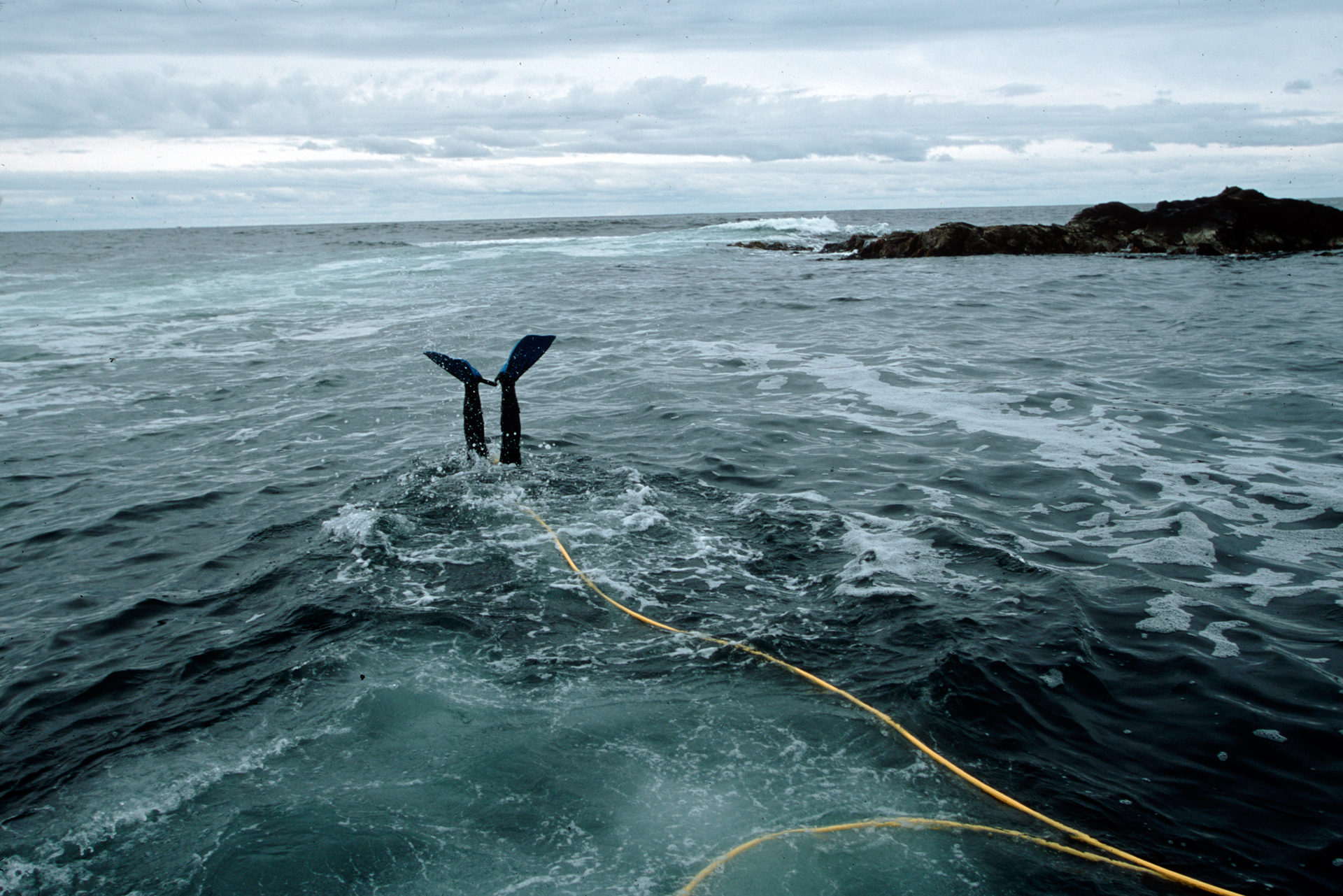 An abalone diver near Strahan on his way to harvest.  Strahan