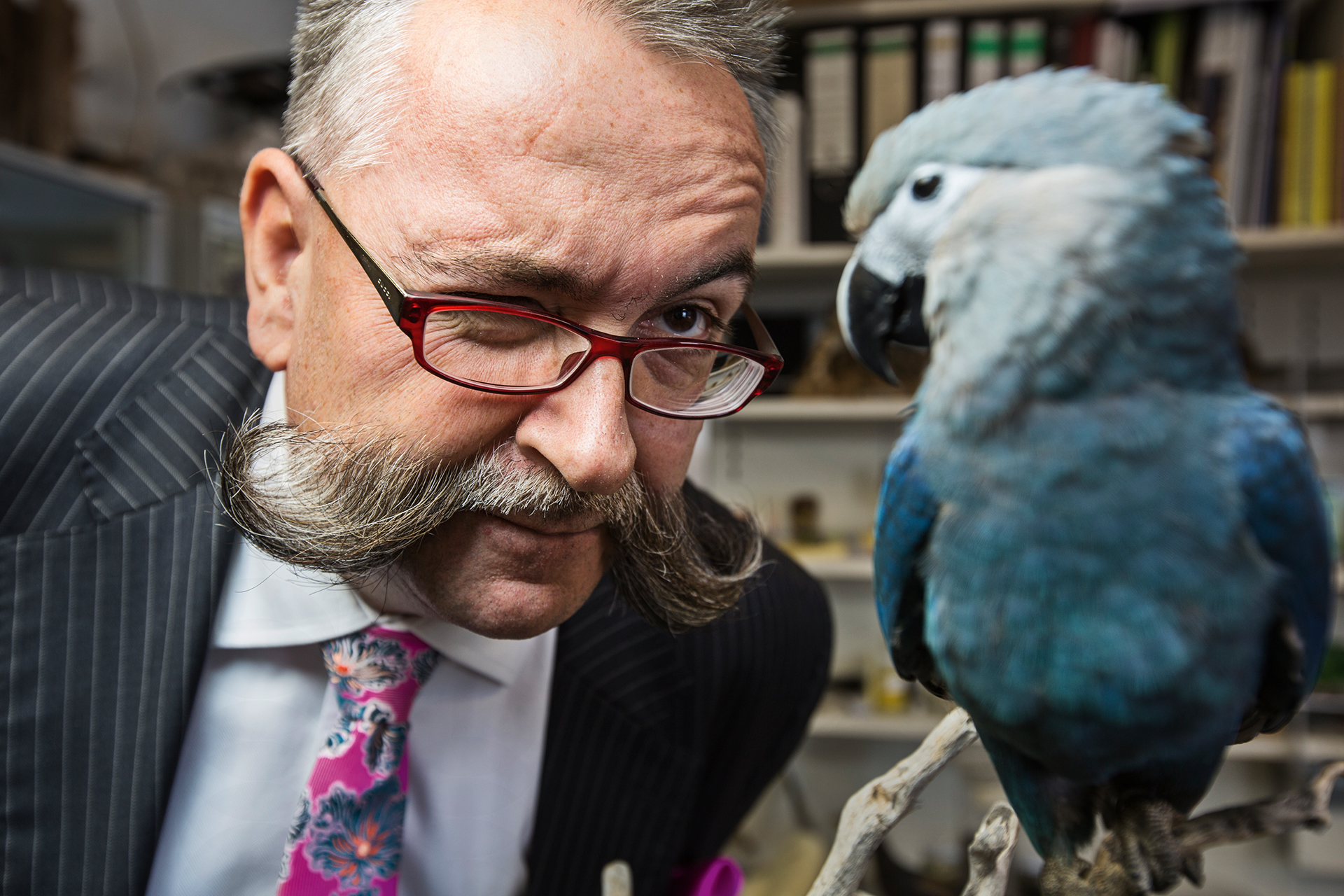 Museum Director Prof. Johannes Vogel inspects a Spix Ara, a species of macaws believed to be extinct in the wild.  Berlin, Germany.