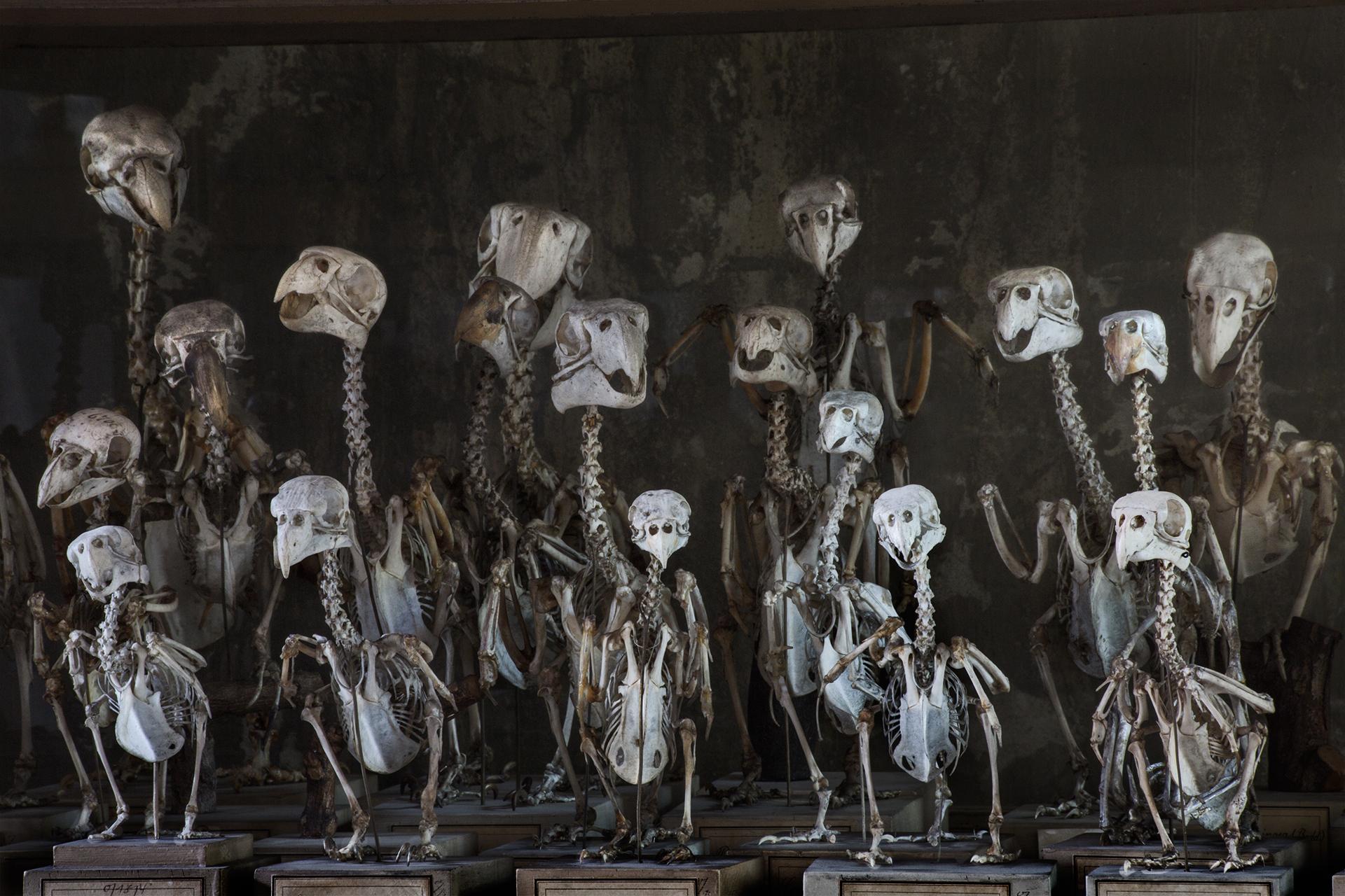 "The storage vaults behind the scenes of the museum contain over 30 million specimen. These songbird and parrot skeletons in the so-called ""bird hall"" would feel equally at home in a haunted house, as they appear to retain a ghost of their living personality.  Berlin, Germany."