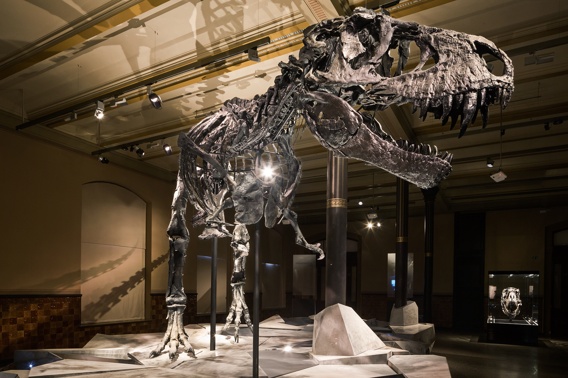 Tristan, the only complete T-Rex skeleton in Europe, has been displayed at Berlin's Natural History Museum since October 2015.  Berlin, Germany.
